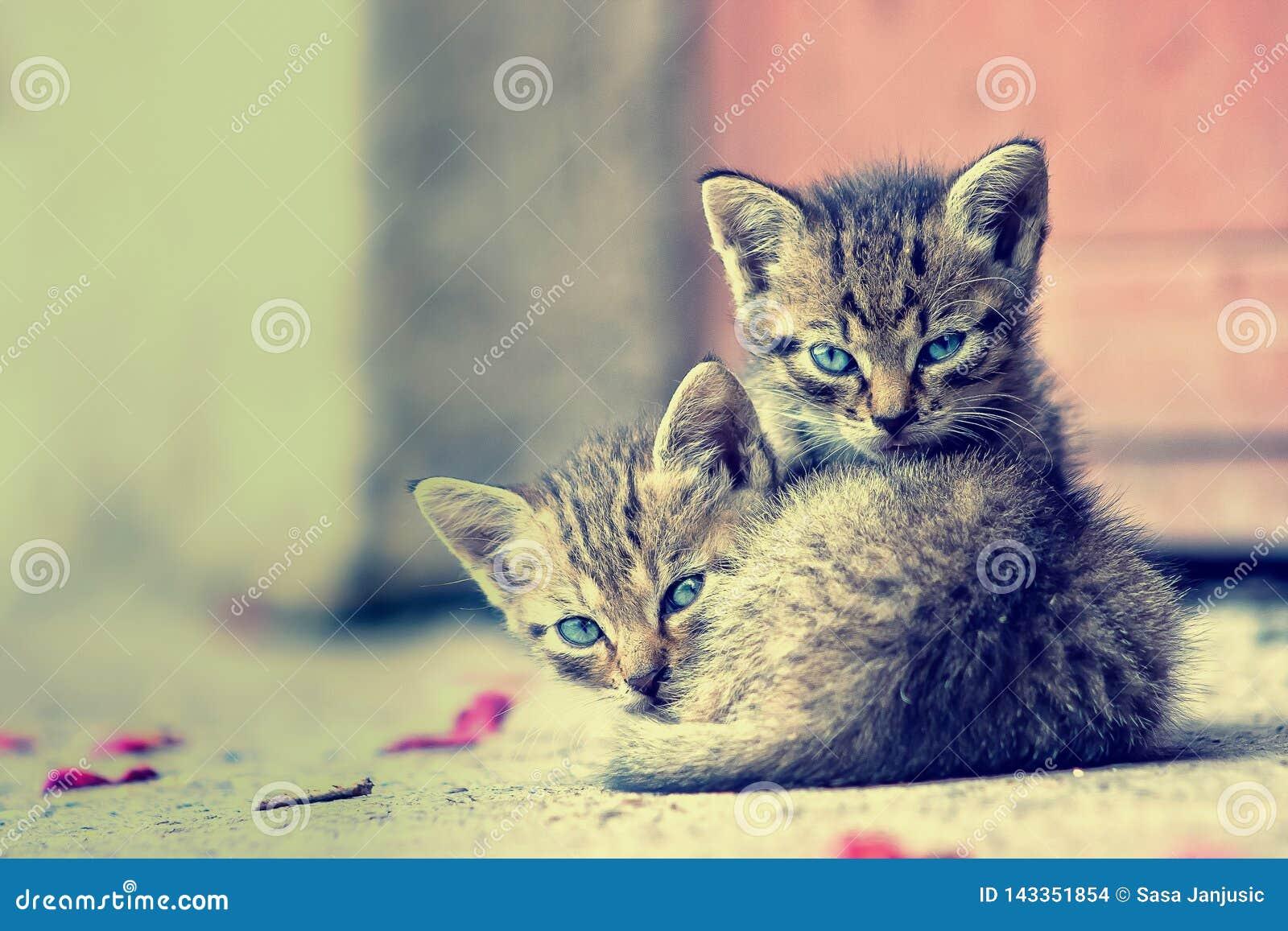 Deux jeunes chatons