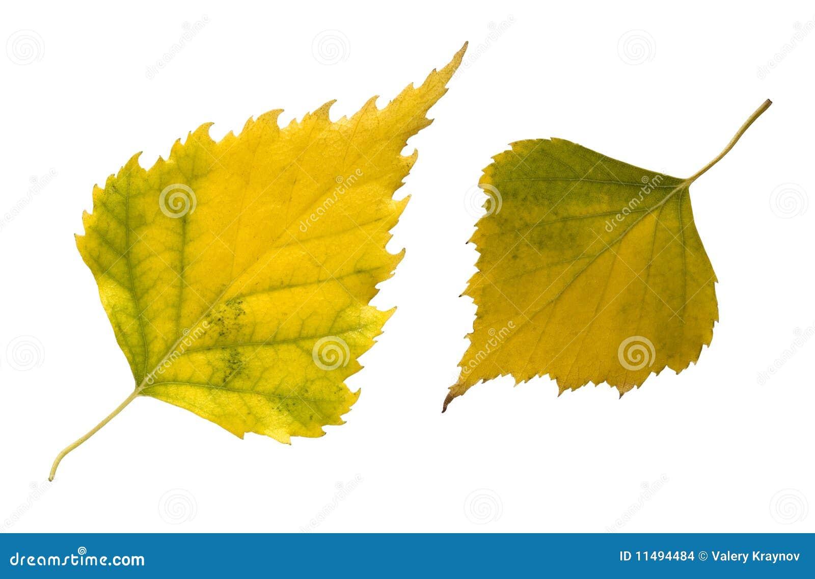 Deux lames d automne