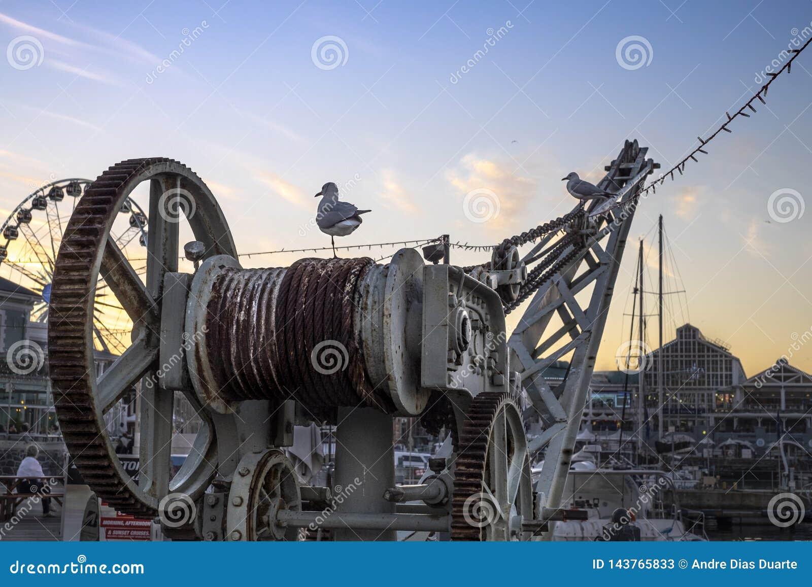 Deux mouettes par le port sur une grue au coucher du soleil