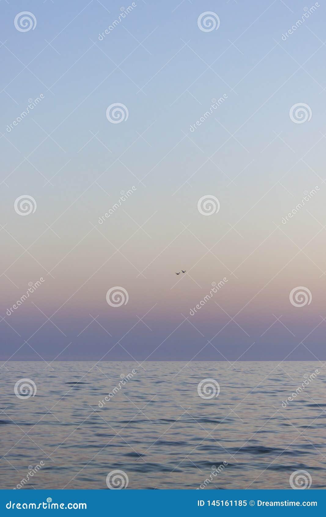 Deux mouettes volent au-dessus de la mer