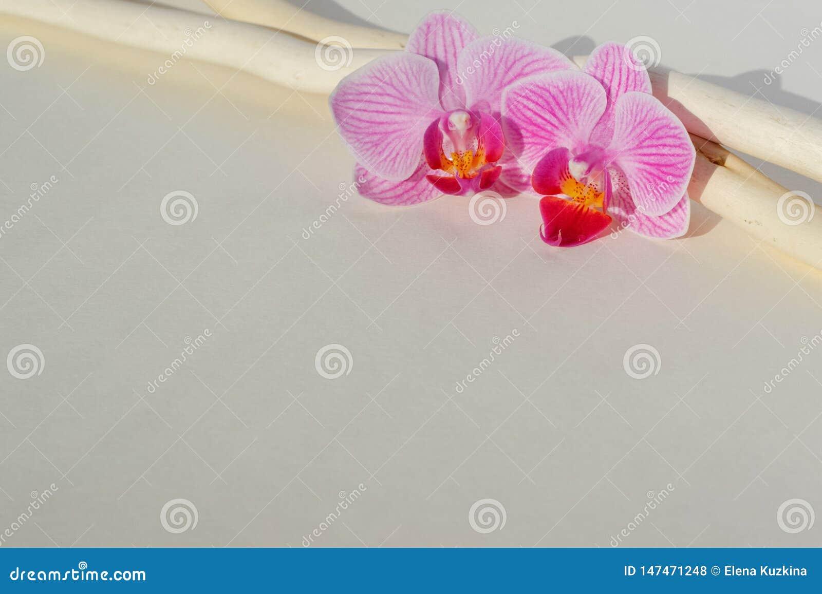 Deux orchidées et deux bâtons sur un papier beige
