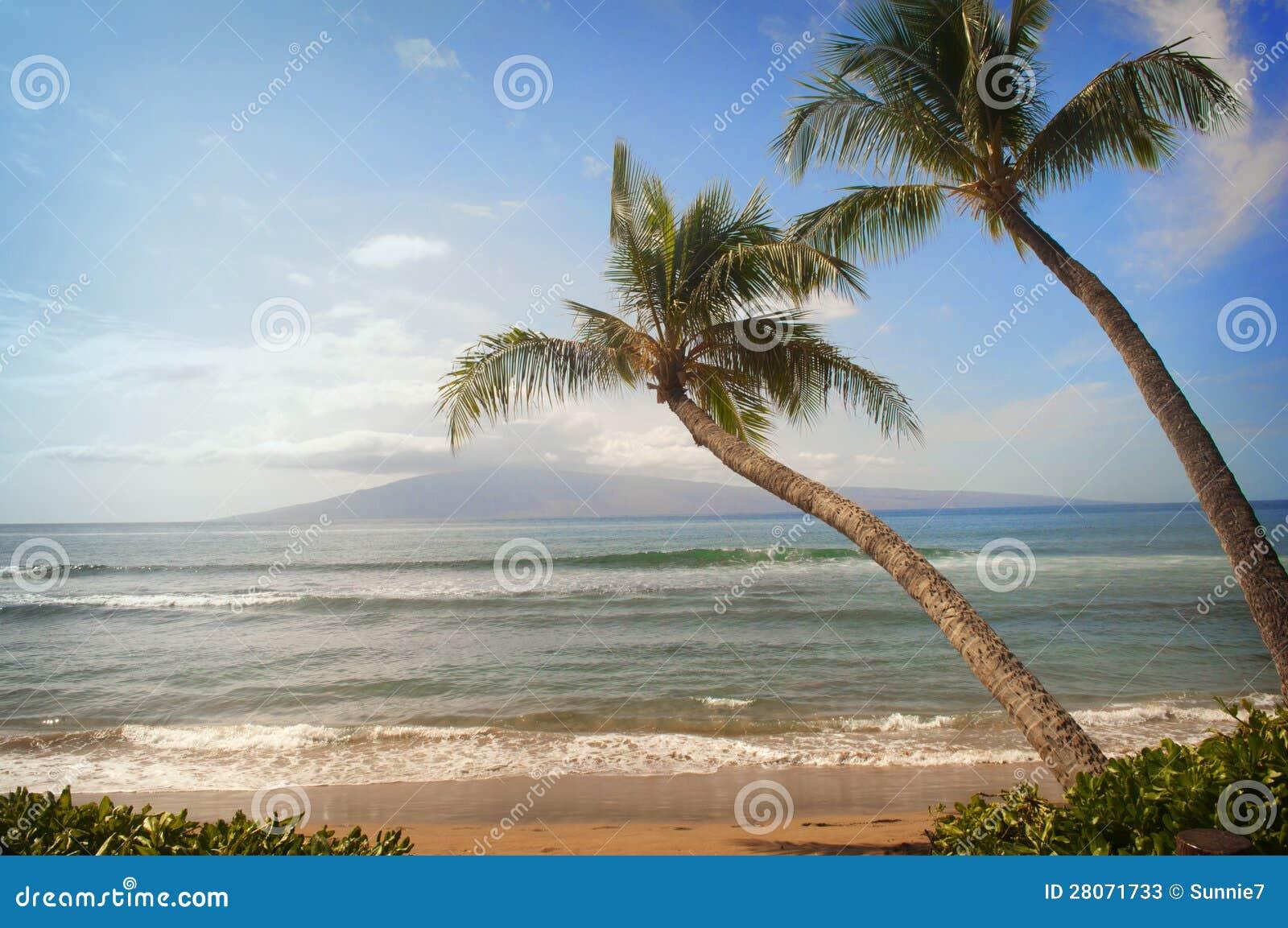 Deux palmiers se penchent sur la vue d océan tropicale de plage