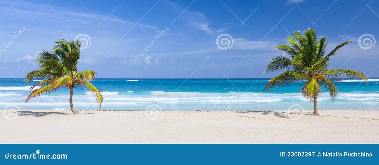 Deux palmiers sur la plage tropicale