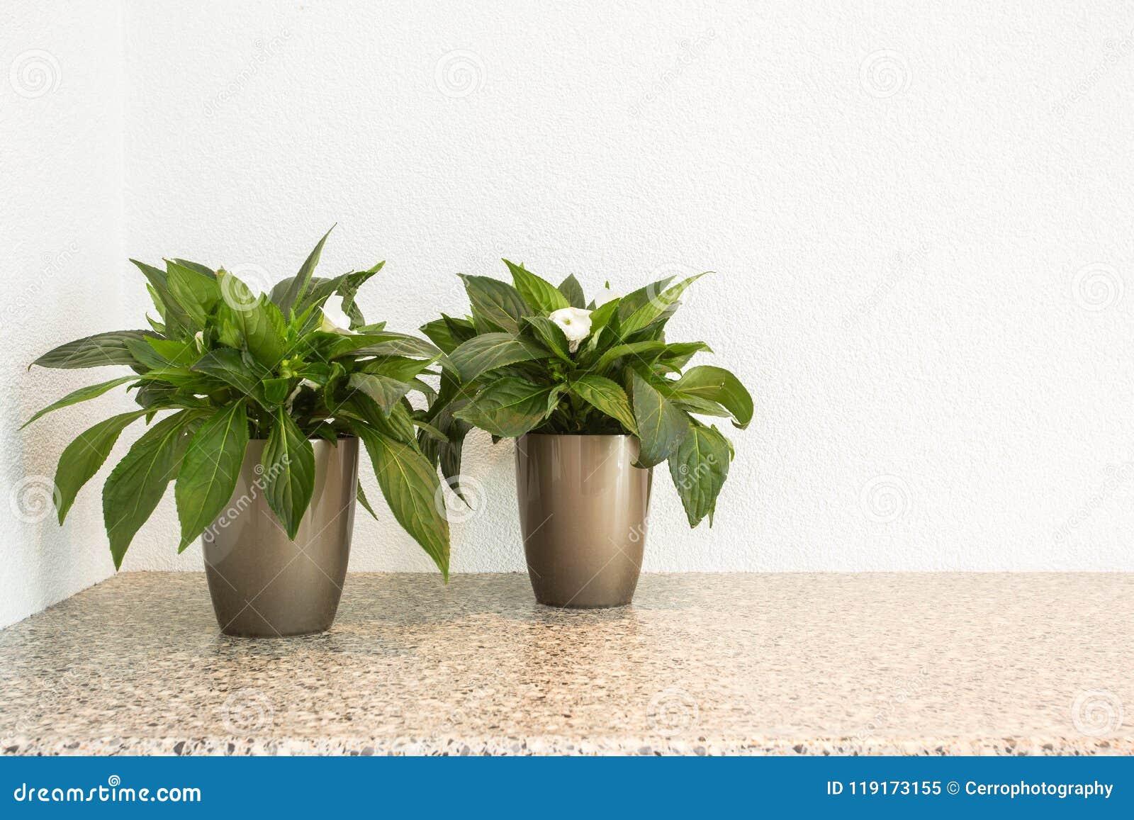 Petites Plantes Fleuries En Pot deux petites plantes vertes dans des pots de fleur pour la