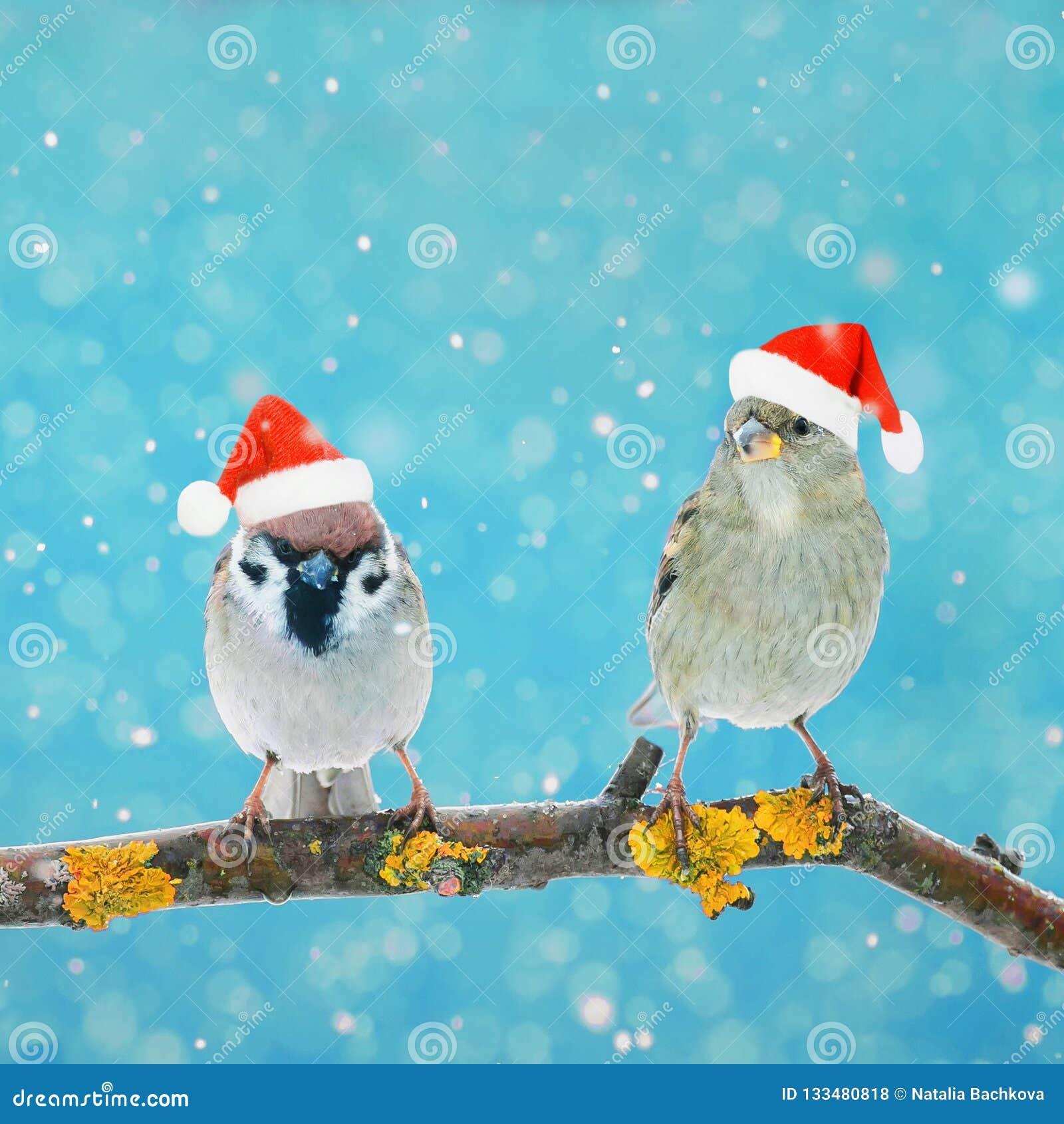 Deux petits oiseaux drôles se reposant sur une branche en hiver dans la neige