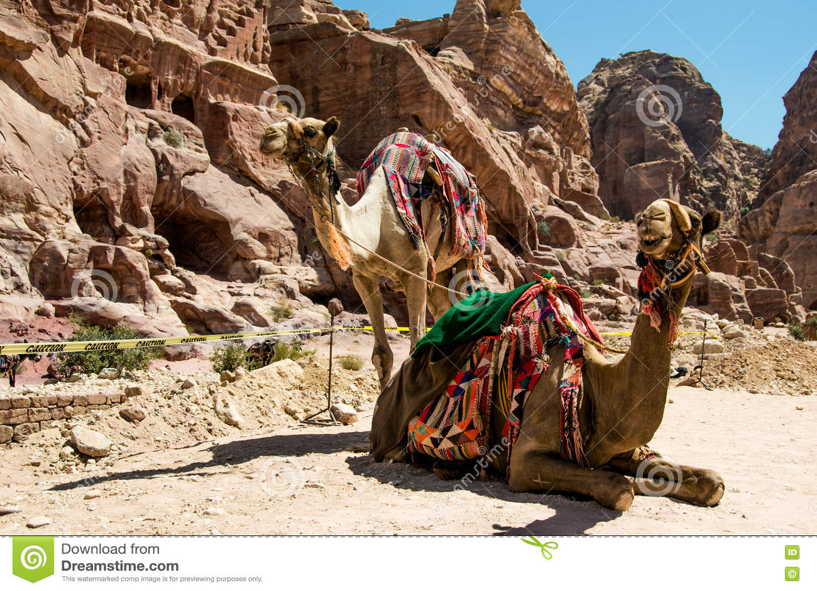 802af394c5e43 Deux repos bédouins de chameaux s approchent des cavernes Vacances d été,  tourisme d eco