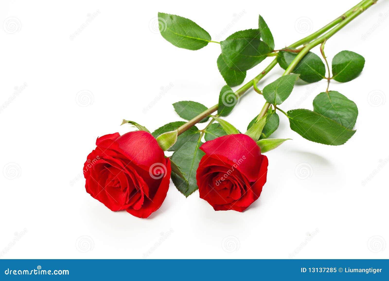 Deux roses rouges