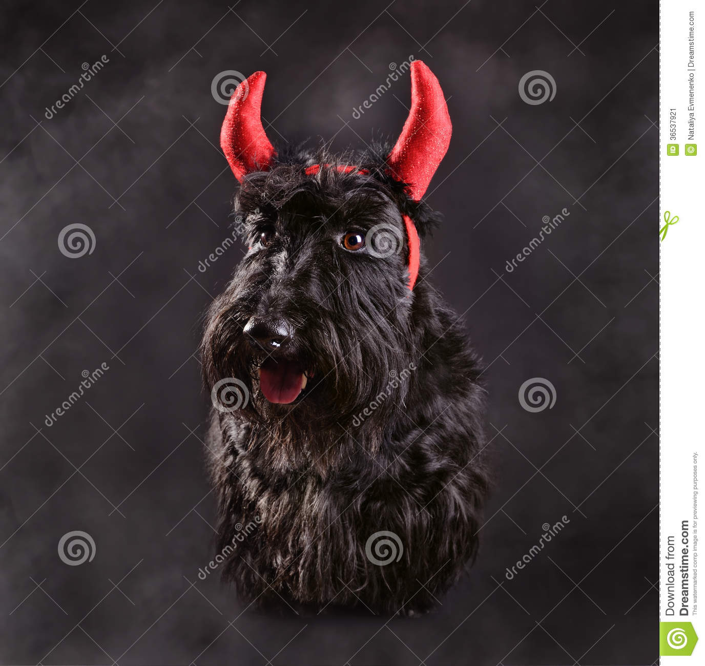 home images devil dog devil dog facebook twitter google+ pinterest ...