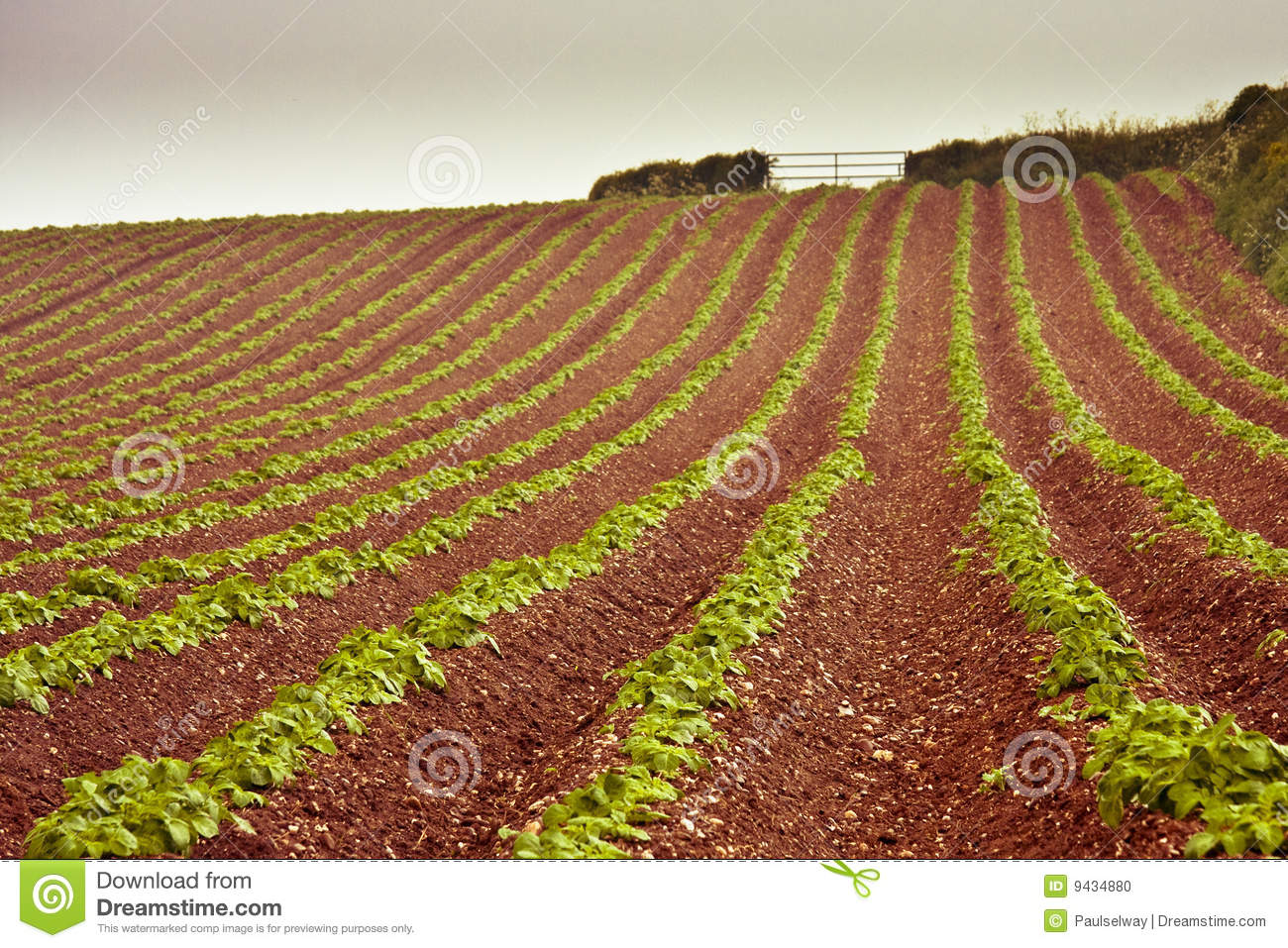 write about red soil crops
