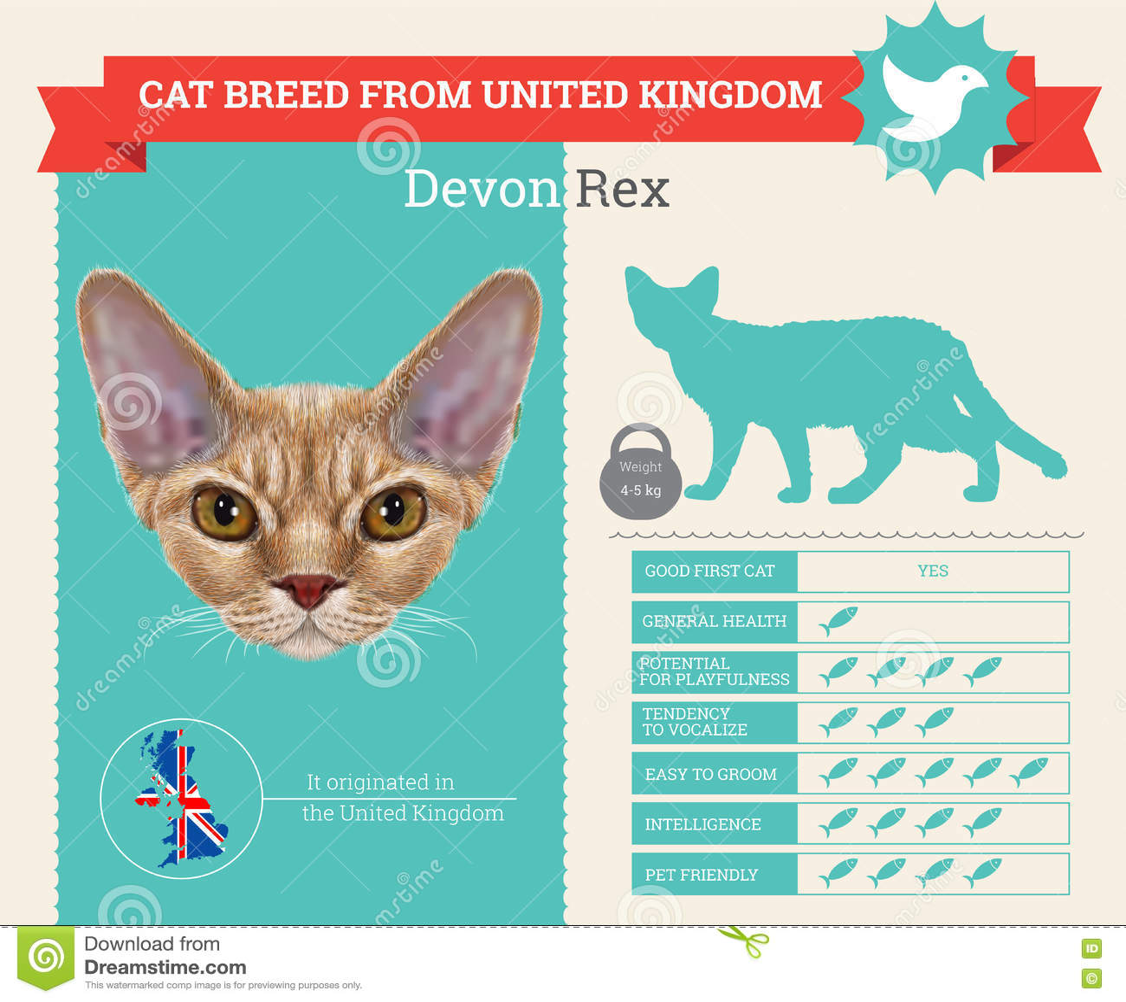 Devon Rex Cat avelinfographics