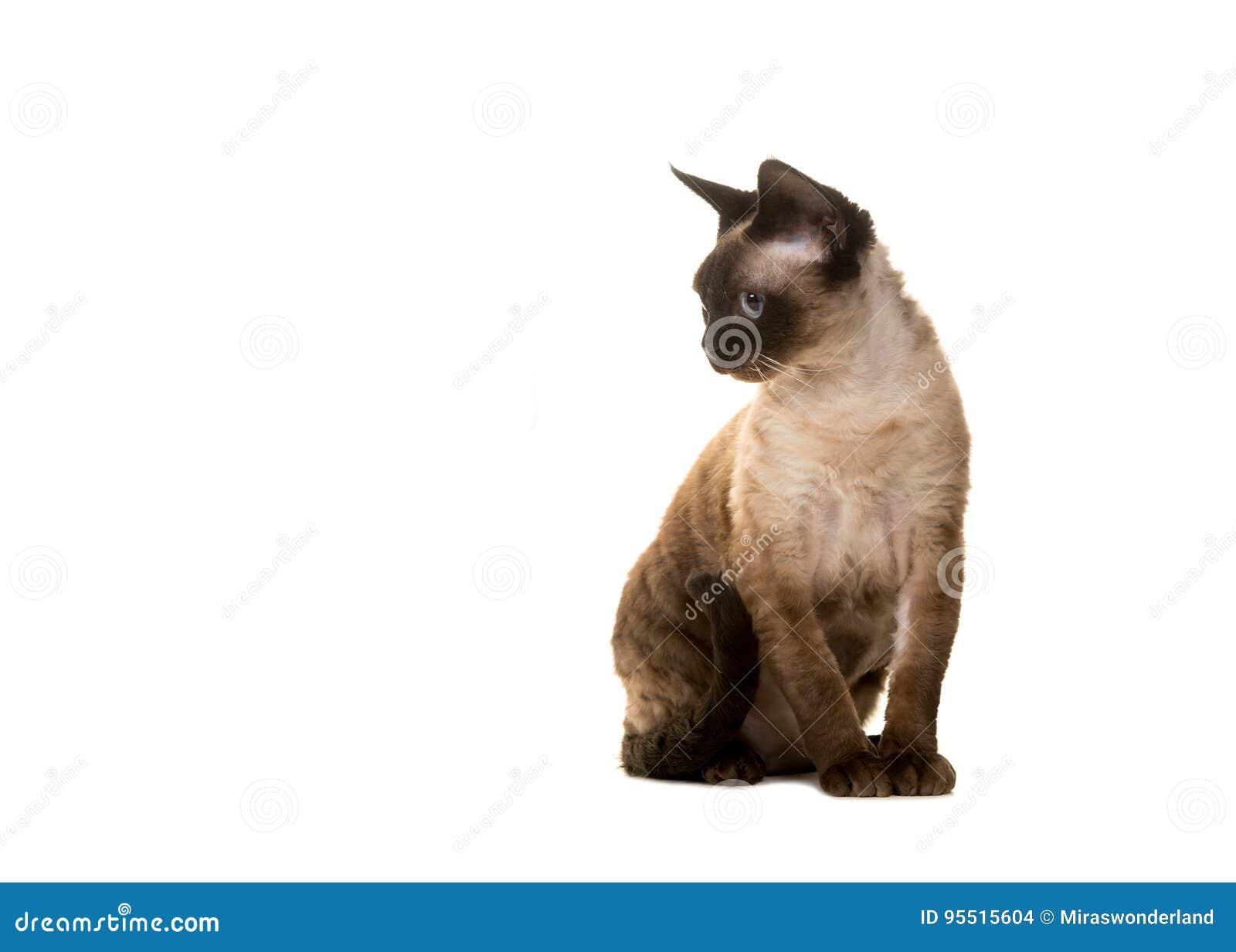 Wunderbar Katze In Der Hut Hut Färbung Seite Ideen - Malvorlagen Von ...