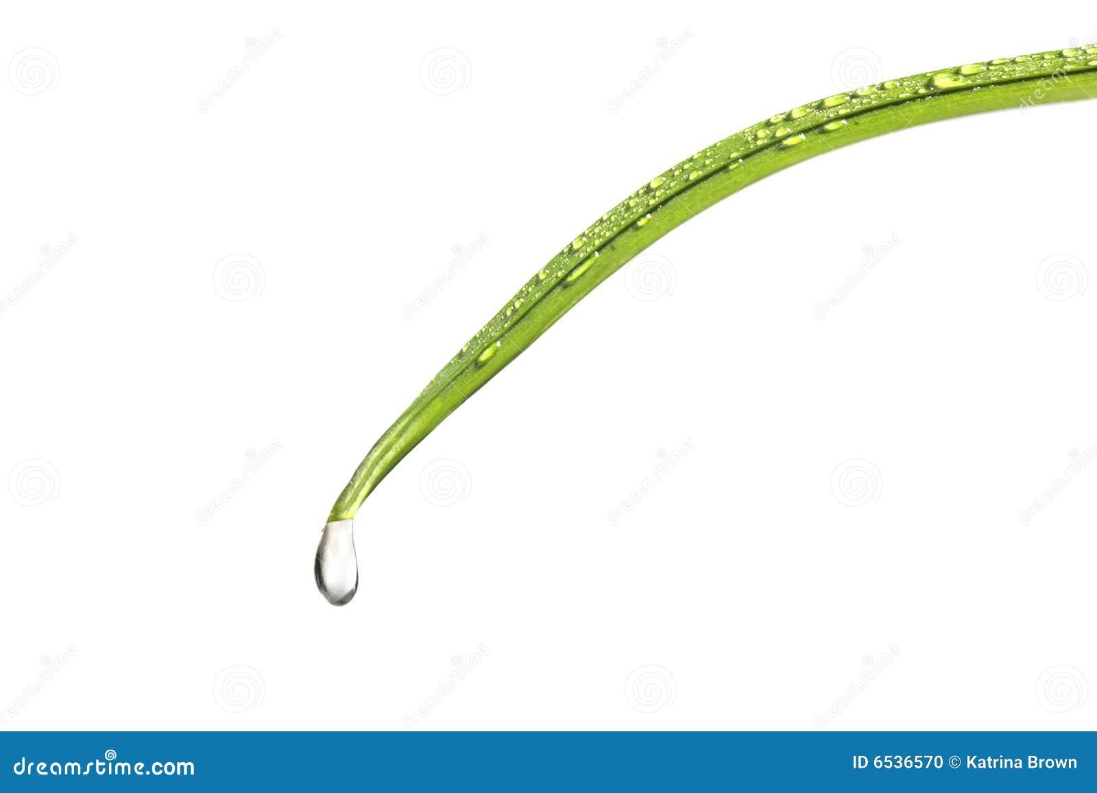 blade of grass vector - photo #43
