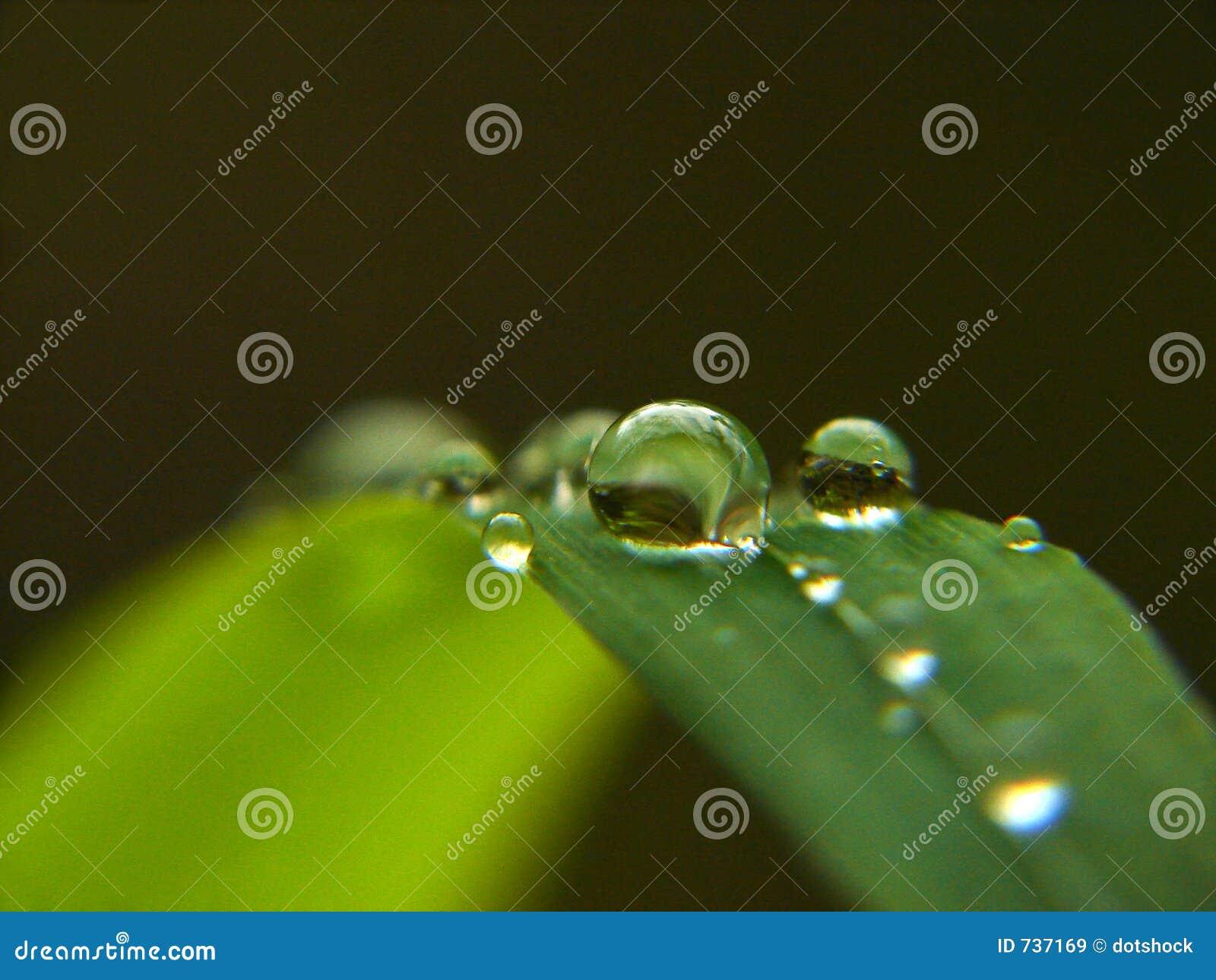 Dew drops in focus