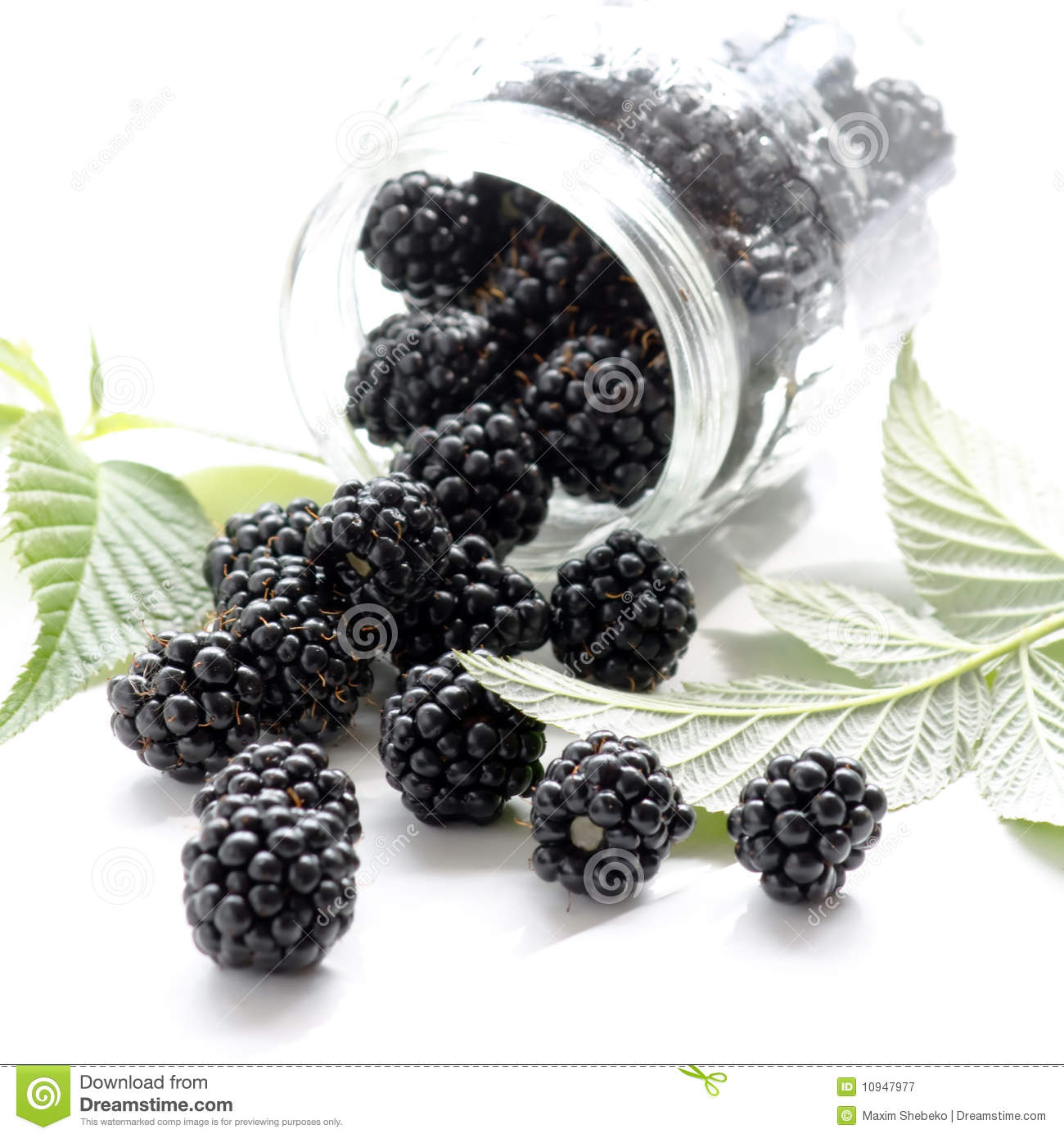 Dewberries ежевик