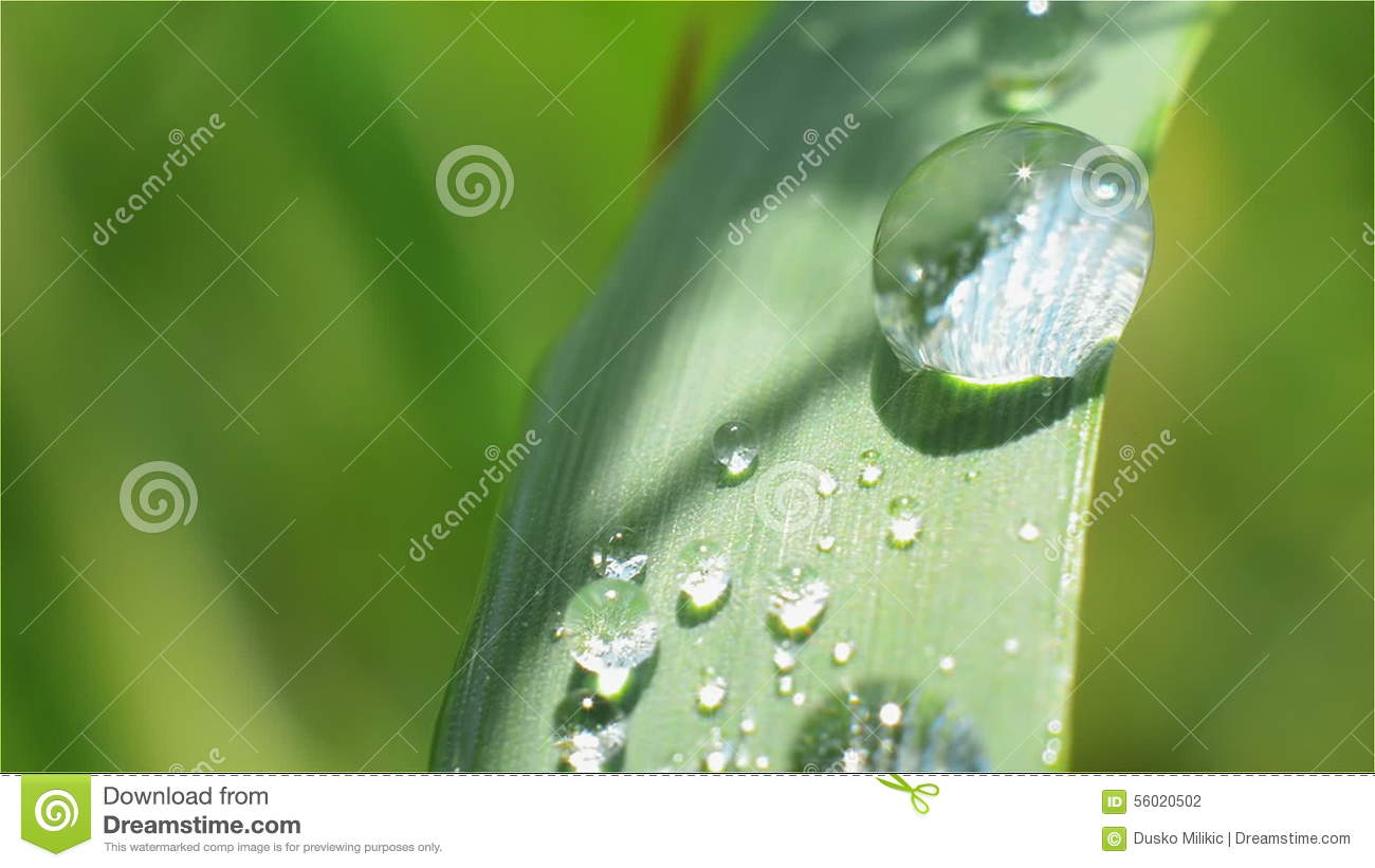 Dewdrop On A Blade Of Grass Close up Green Stock Footage Video of
