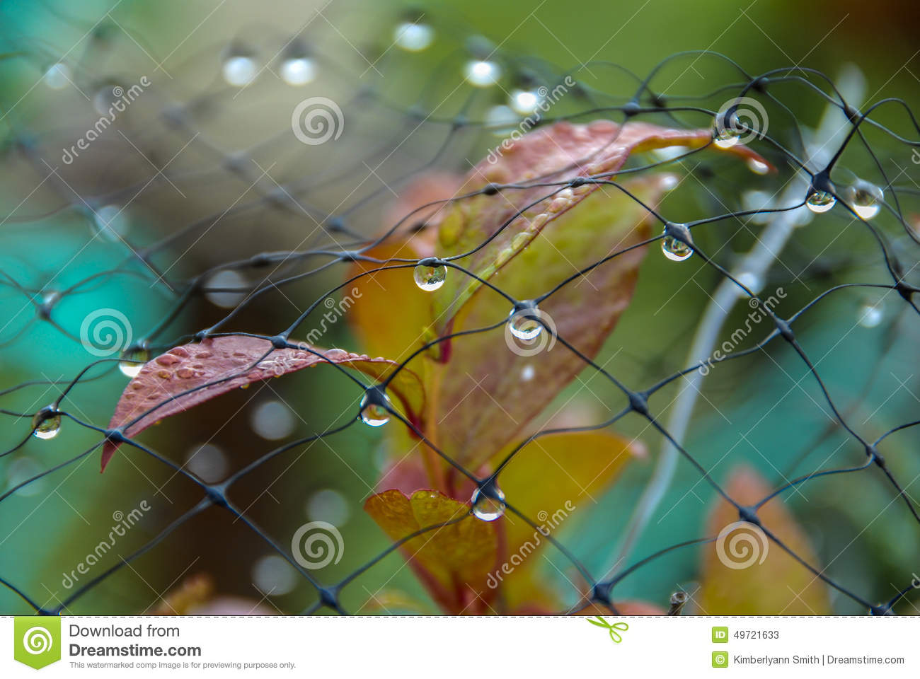 Dewdrops on mesh