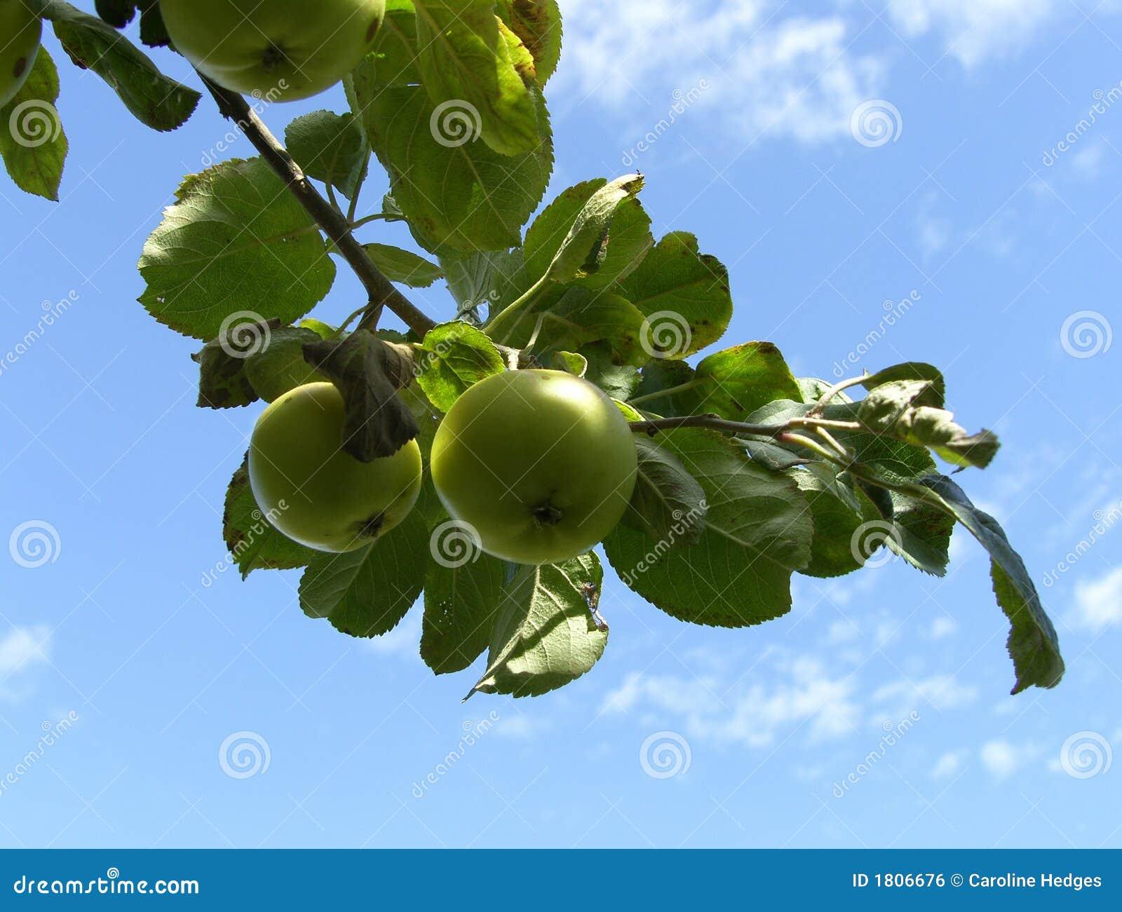 Di melo