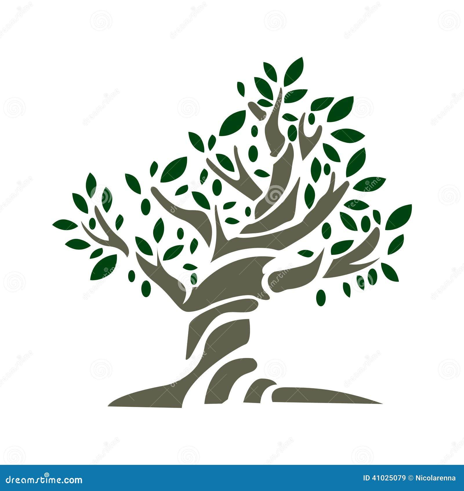 di olivo illustrazione vettoriale illustrazione di bacca On albero ulivo vettoriale