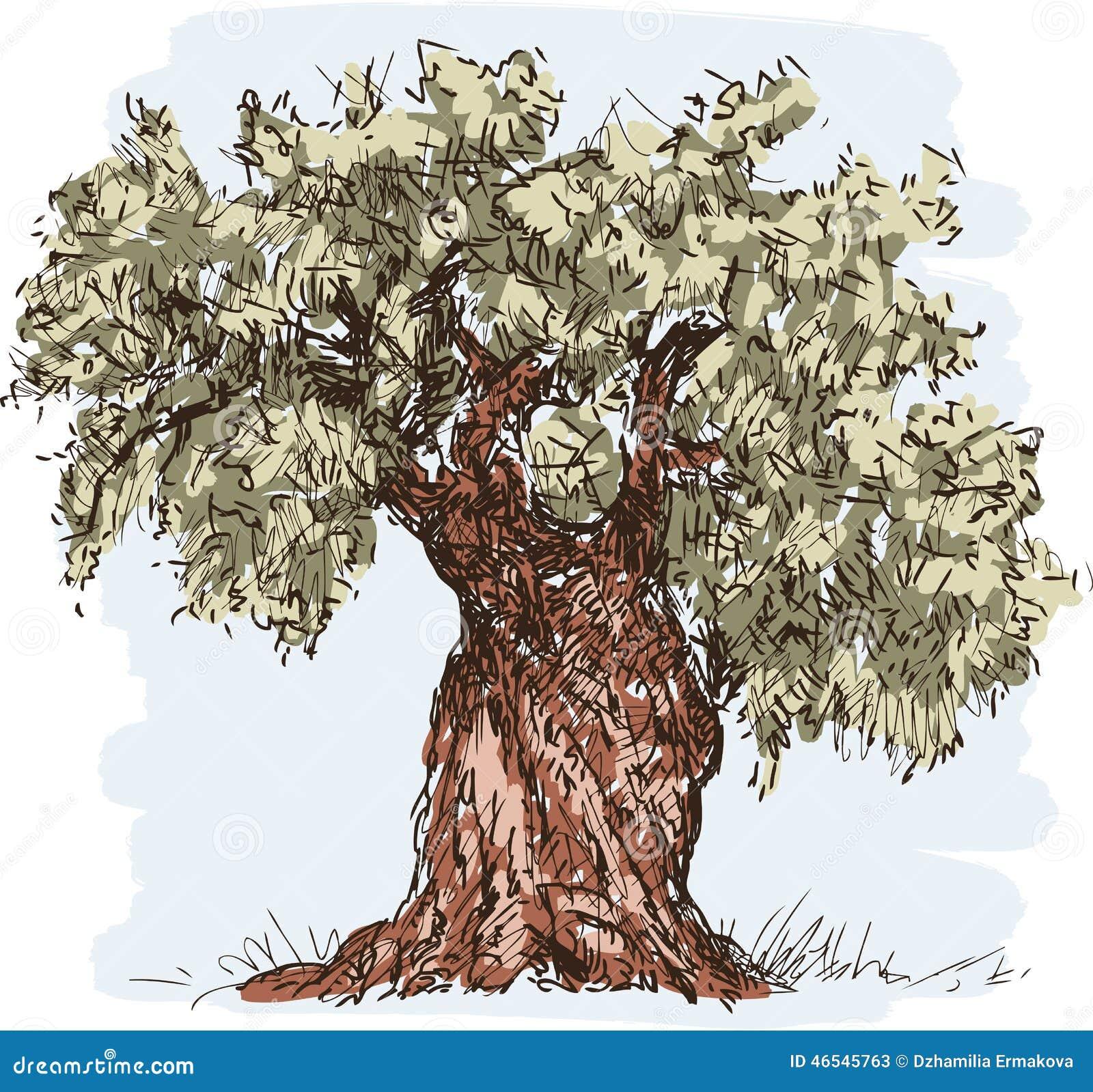 Di olivo illustrazione vettoriale illustrazione di for Acquisto piante olivo
