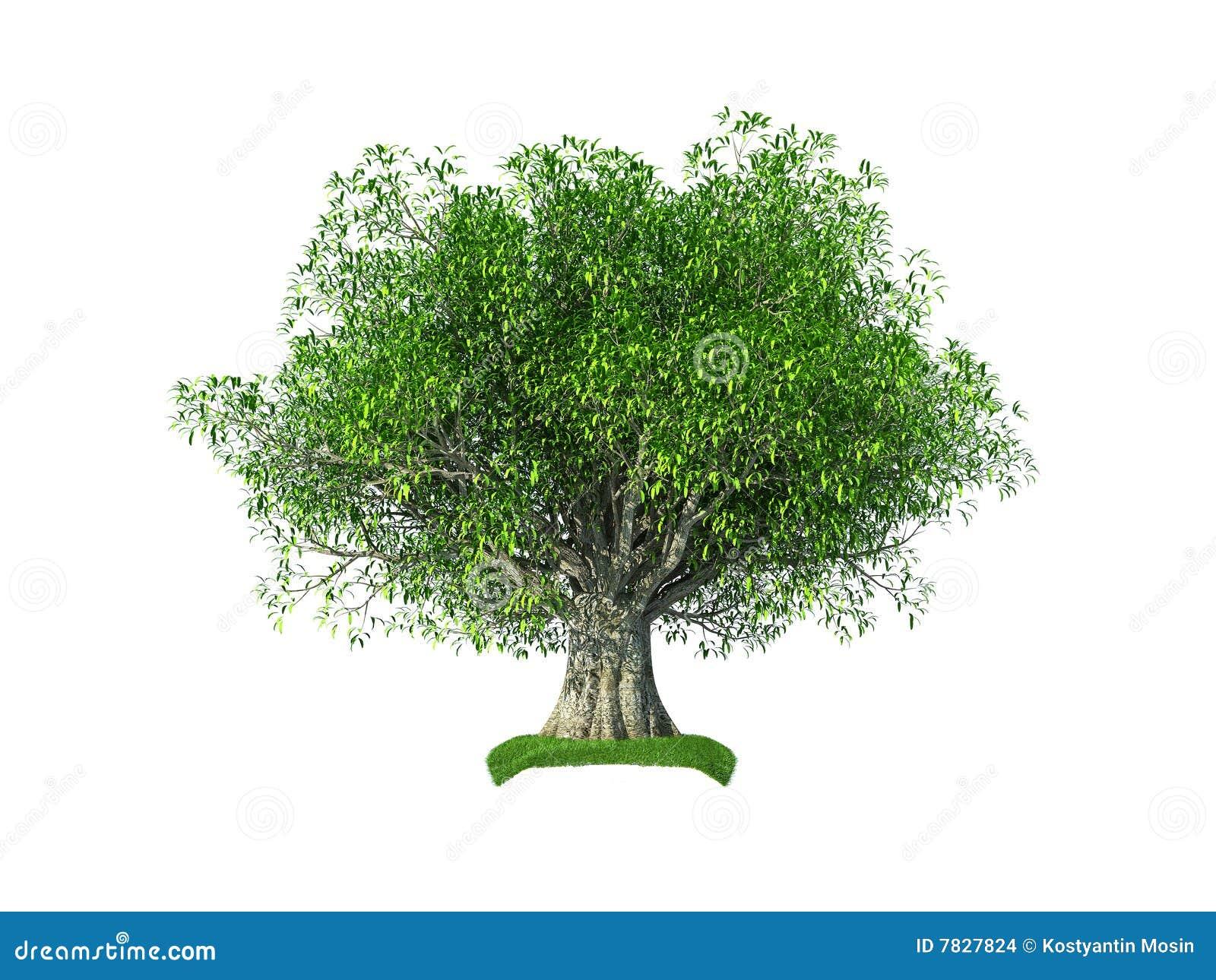 Di olivo 3d illustrazione di stock immagine di filiale for Acquisto piante olivo