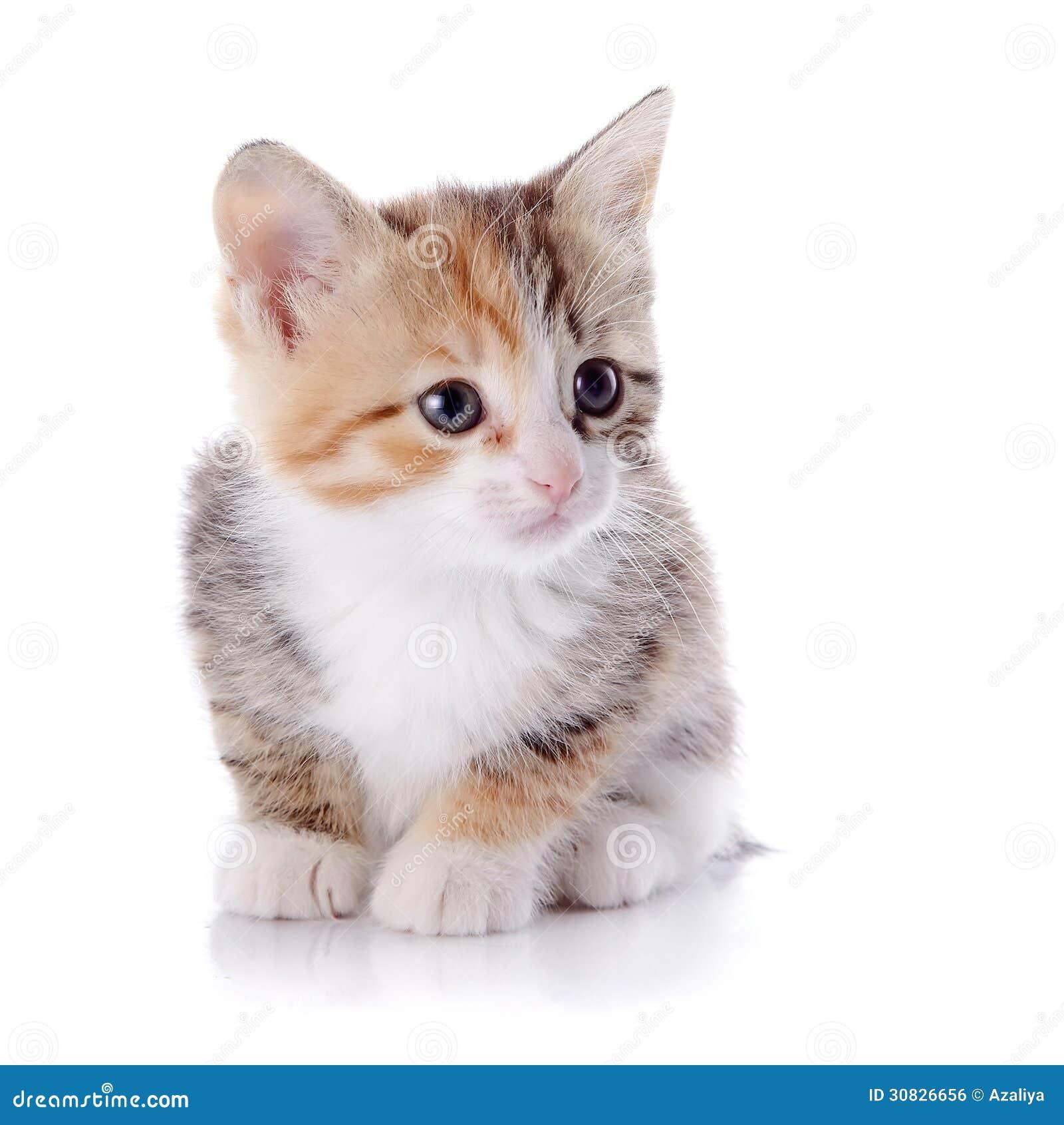Di piccolo gattino colorato Multi.