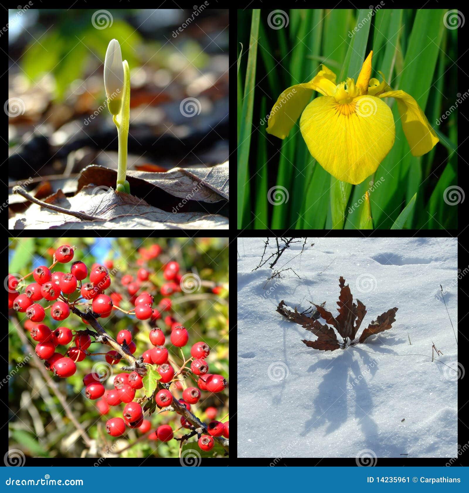 Di quattro stagioni