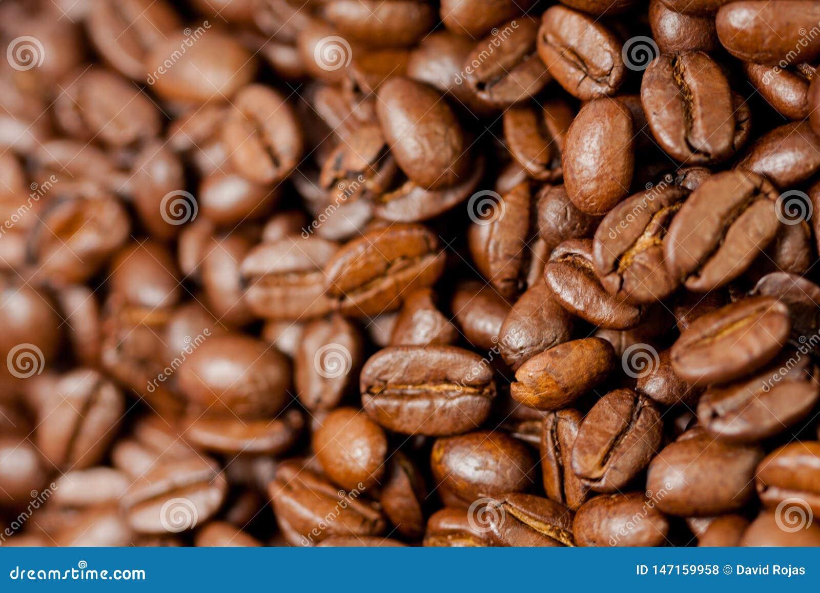 Di recente macinato i fagioli del caffè arrostiti con i frutti della pianta del caffè, pieni dei grani