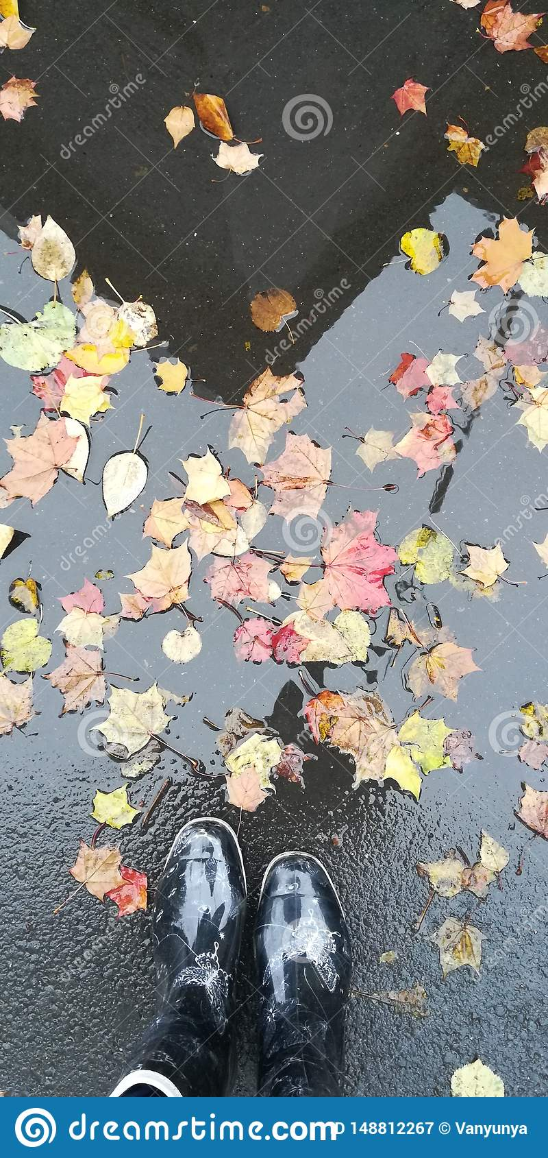 Dia chuvoso do outono