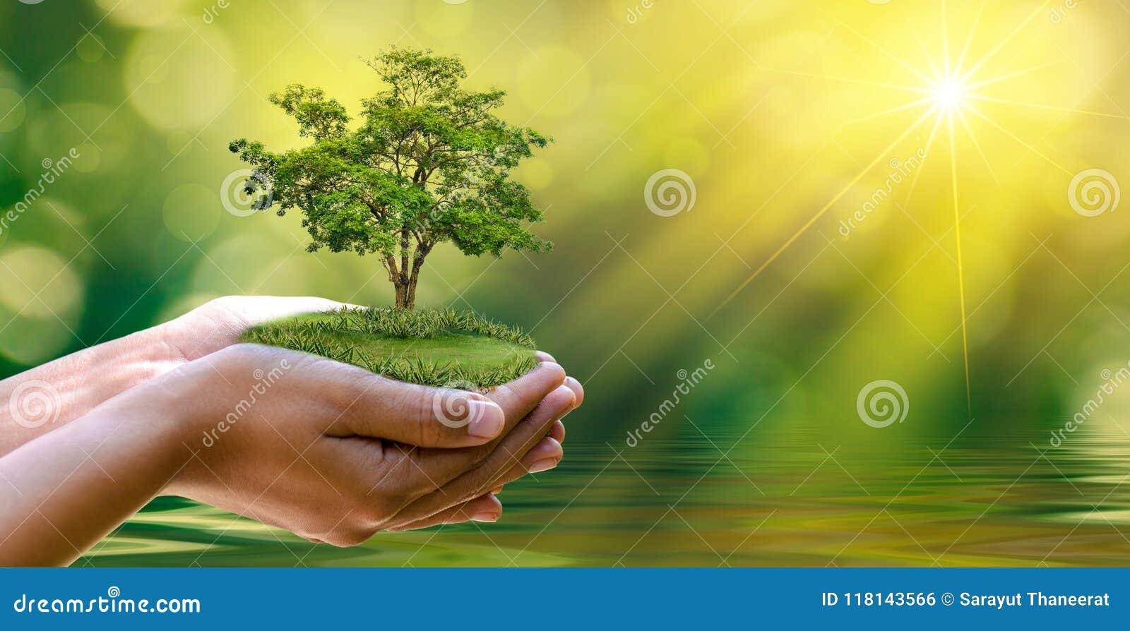 Dia da Terra do ambiente nas mãos das árvores que crescem plântulas Bokeh esverdeia a mão fêmea do fundo que guarda a árvore no g
