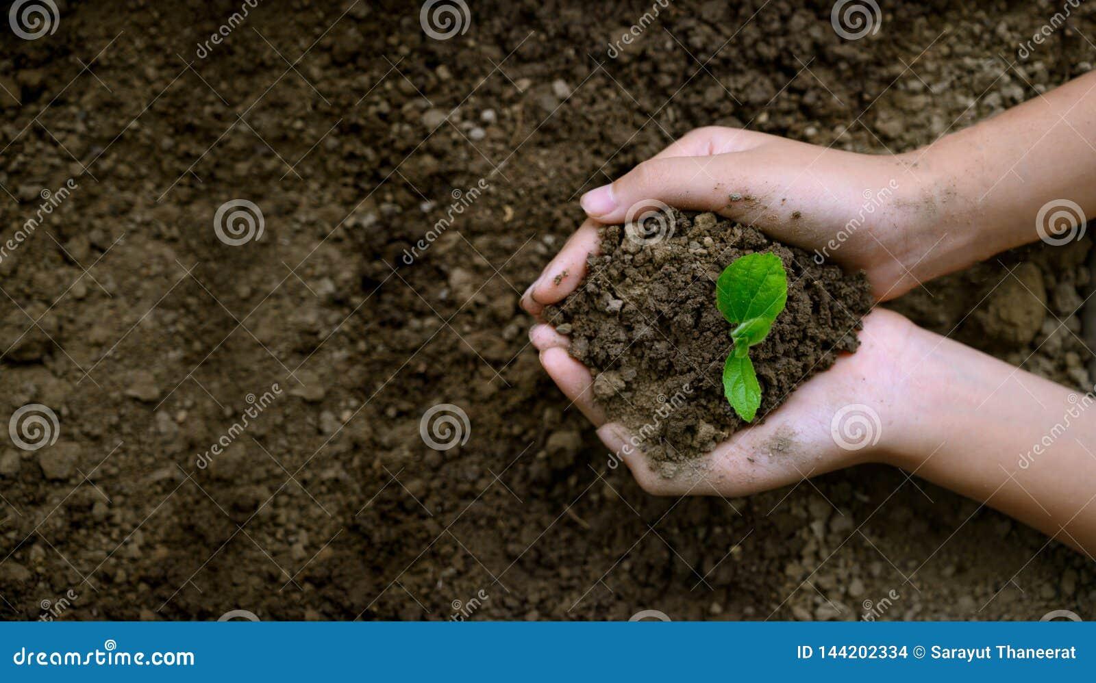 Dia da Terra do ambiente nas m?os das ?rvores que crescem pl?ntulas ?rvore f?mea da terra arrendada da m?o do fundo do verde de B