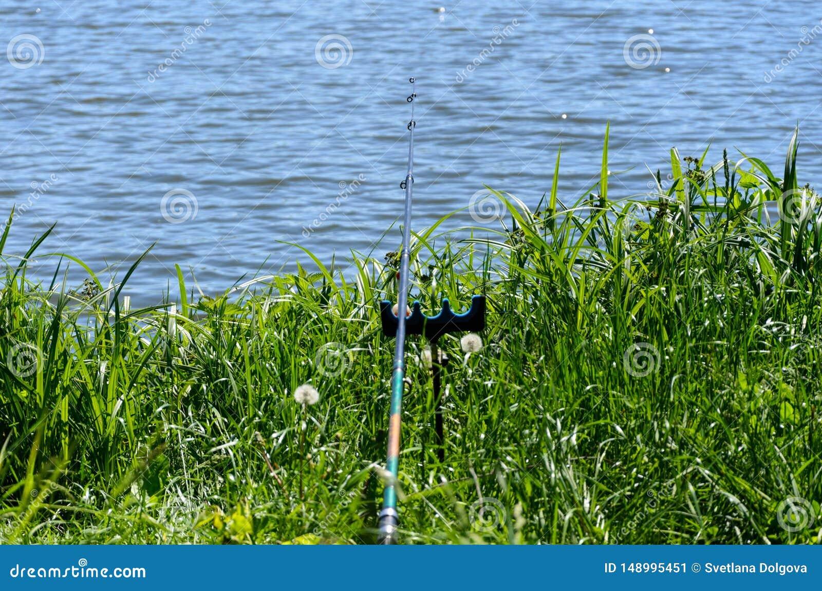 Dia de pesca no lago da floresta