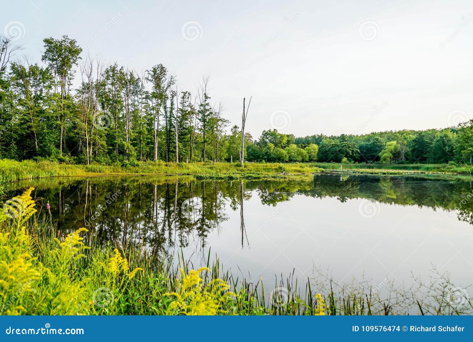 Dia de verões morno em Ohio do nordeste