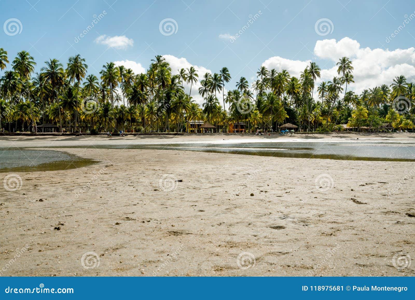 Dia ensolarado bonito com palmas e reflexões da água no paraíso