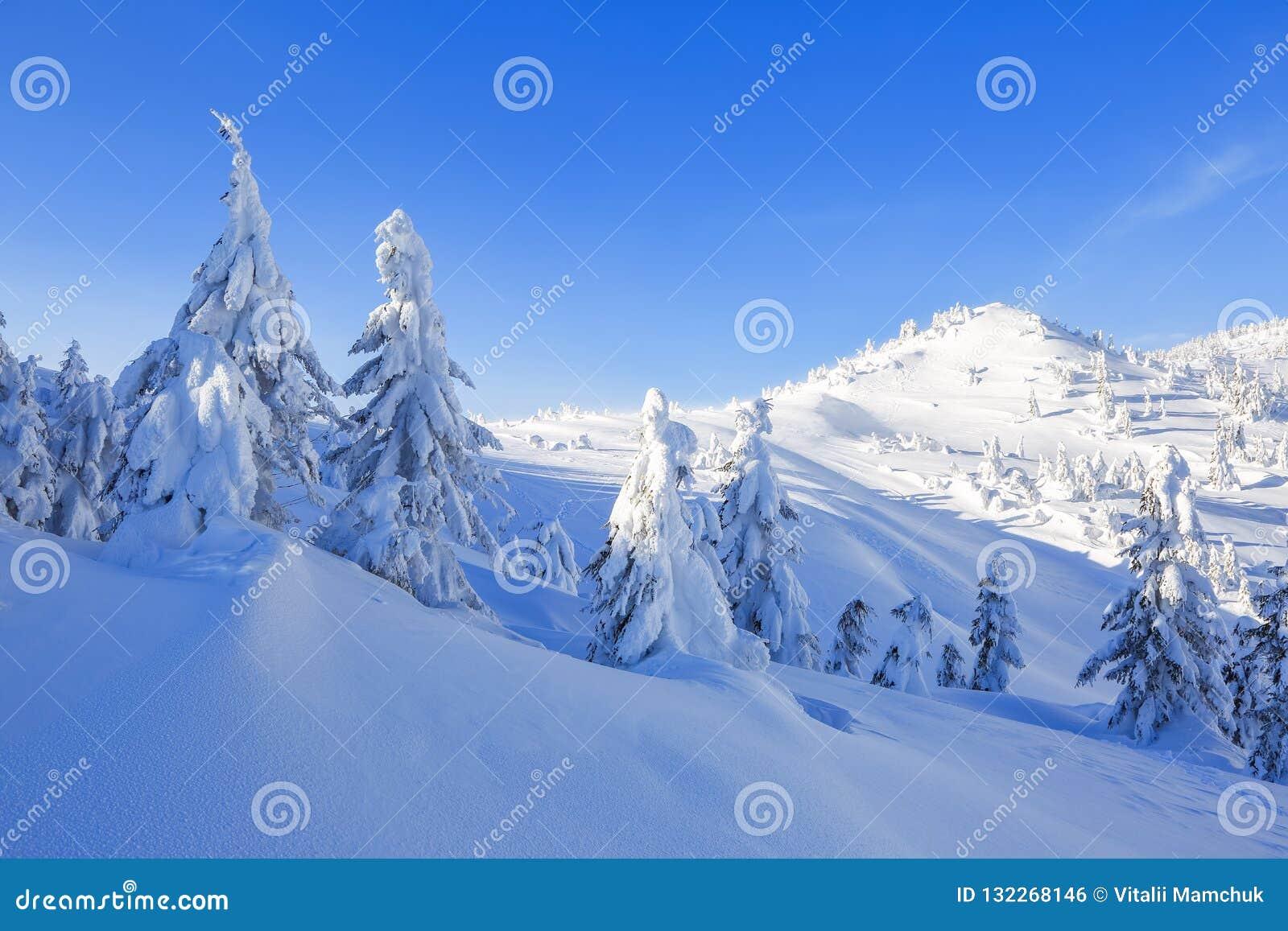 Dia ensolarado do inverno frio Misterioso, secreto, fantástico, mundo das montanhas No gramado coberto com a neve as árvores agra