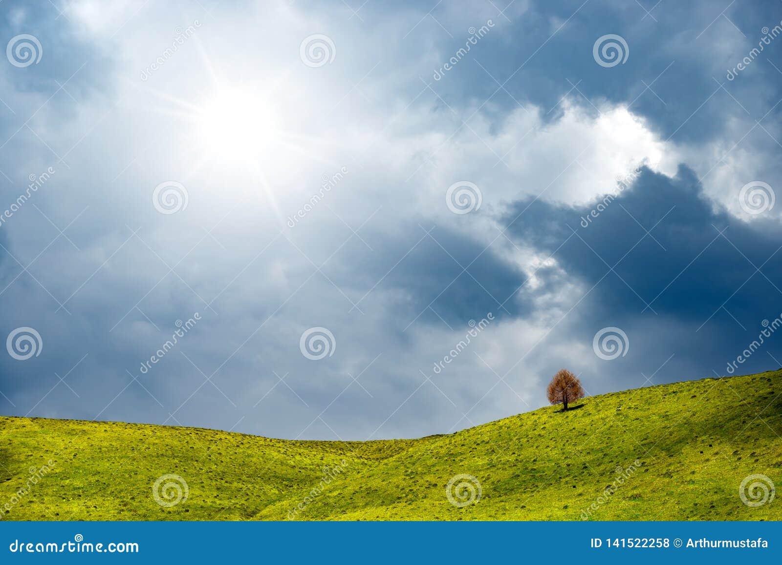 Dia ensolarado na mola com o monte coberto pela grama e pela árvore Opinião idílico da paisagem do campo, árvore só entre os camp