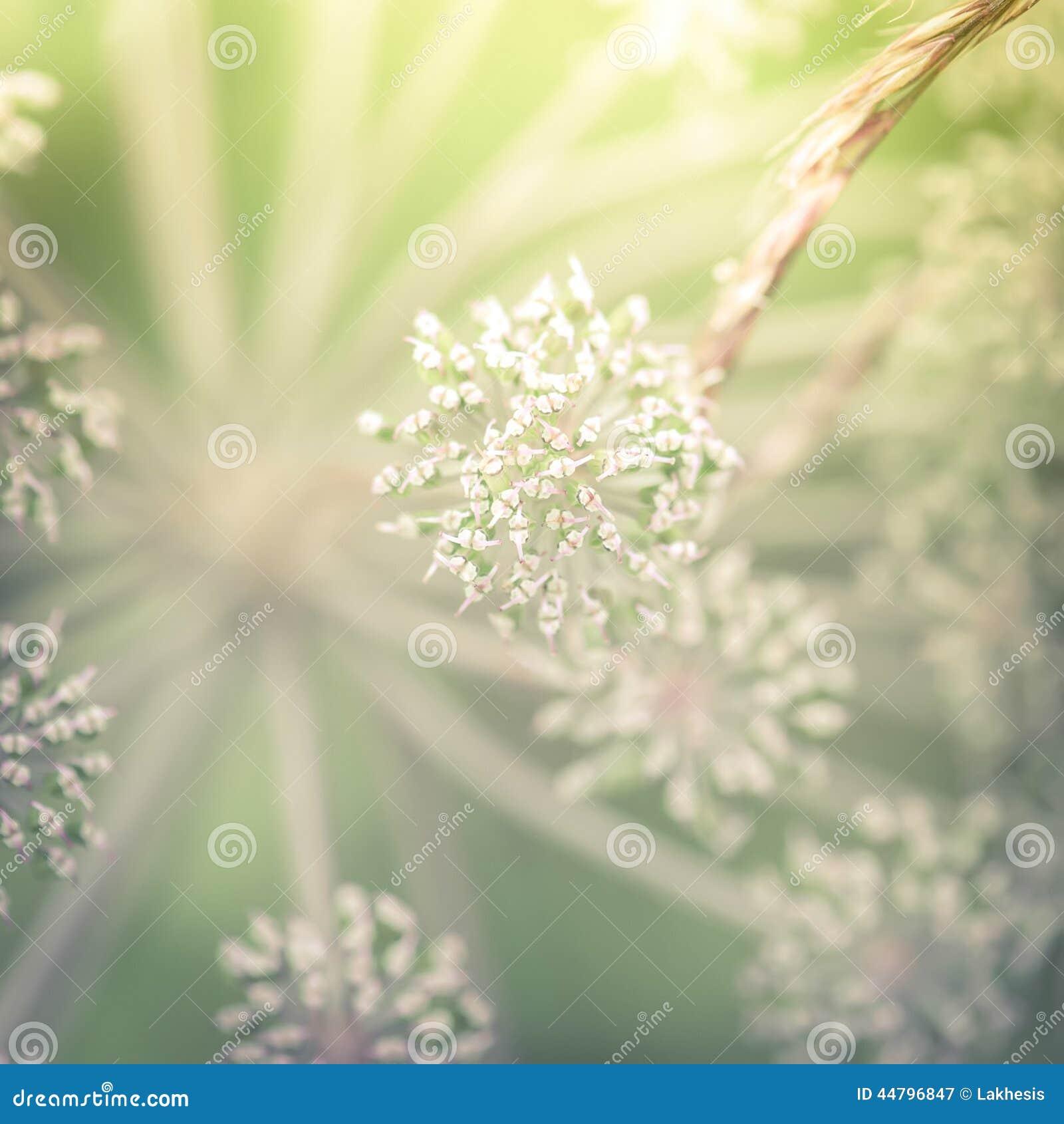 Dia ensolarado surpreendente no prado do verão com wildflowers