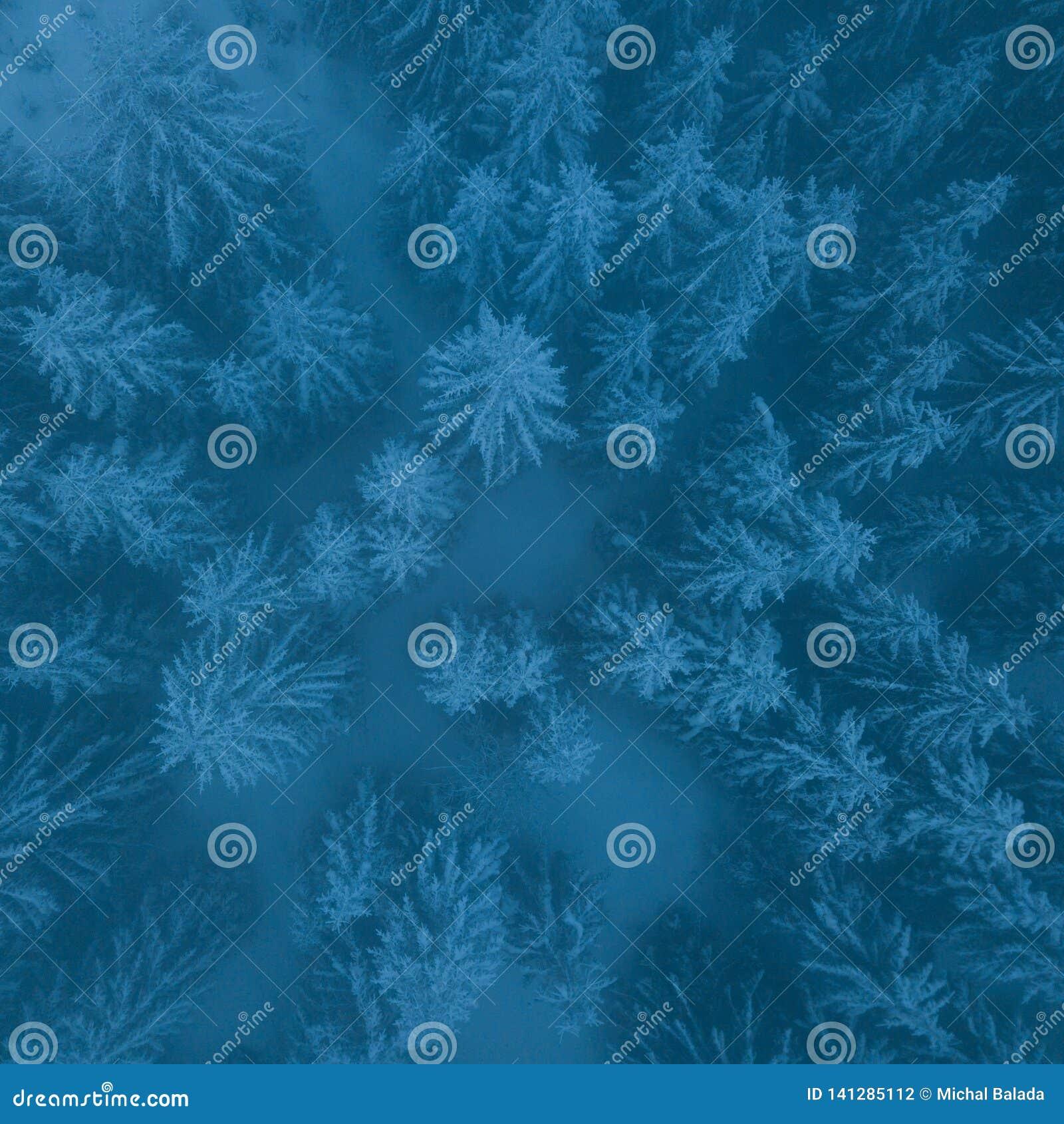 Dia nebuloso gelado em árvores nevados da floresta do abeto vermelho da montanha na tempestade de neve Tiro cinemático de um bliz