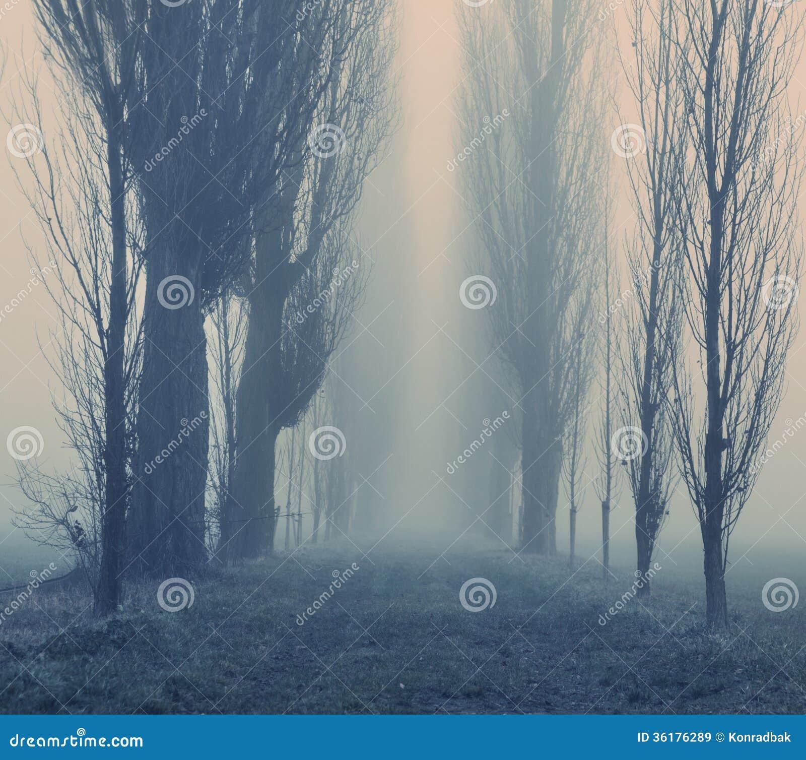 Dia nevoento do outono na floresta
