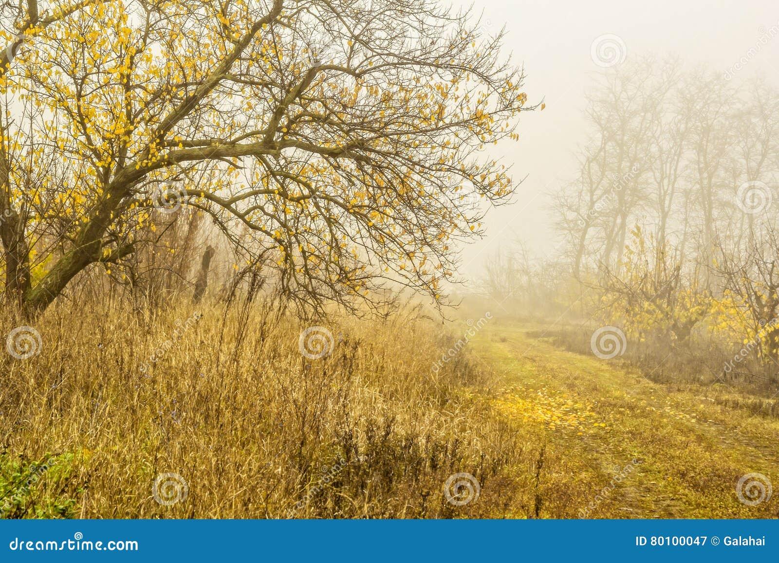 Dia nevoento na floresta do outono