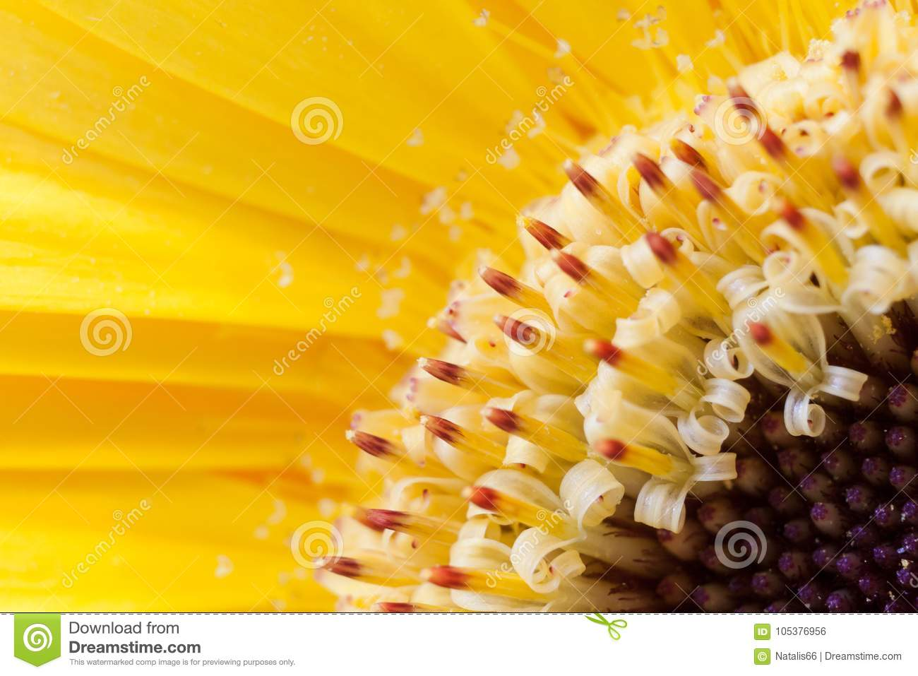 Diagonal blurred floral background. Close-up yellow gerberas petals and stamens with pollen.