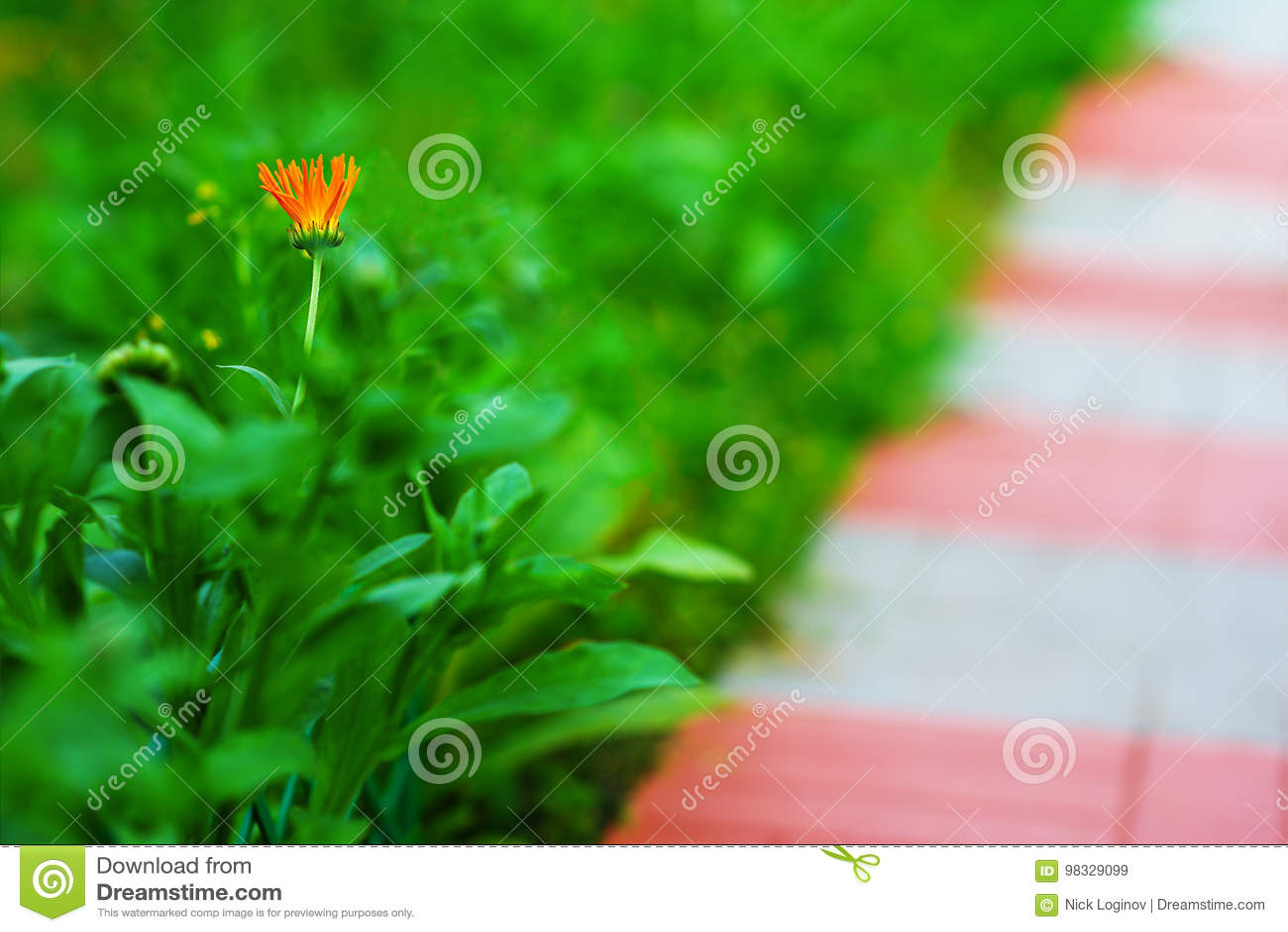 Diagonal Path With Left Aligned Orange Flower Background