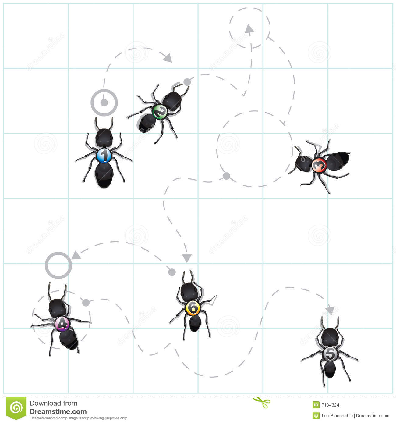Diagram of ant patterns
