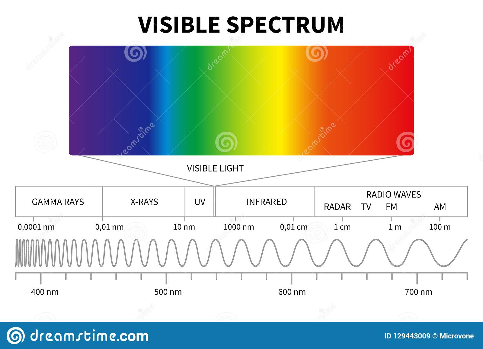 Diagram för synligt ljus Elektromagnetiskt spektrum för färg, frekvens för ljus våg Bildande skolafysikvektor