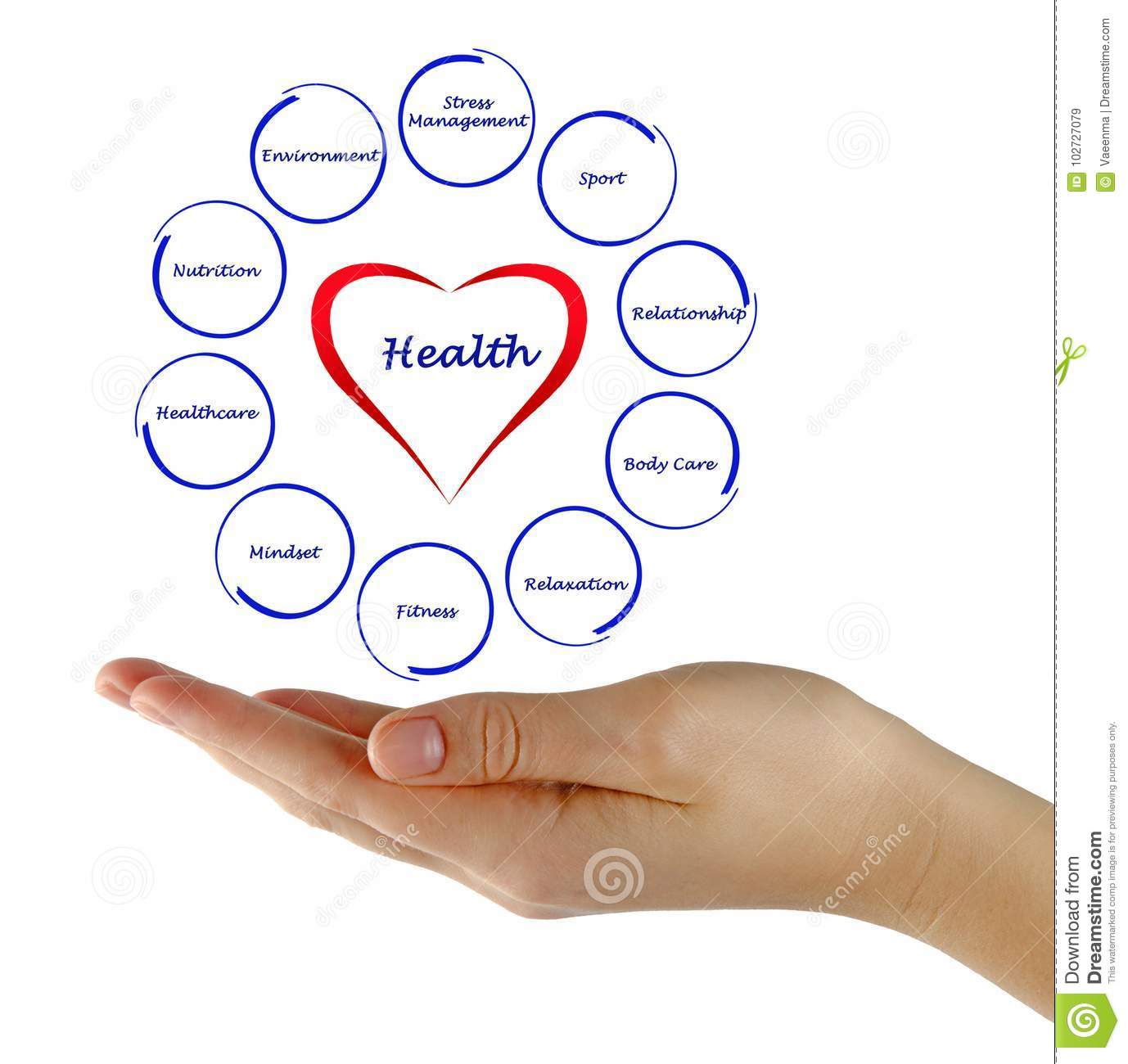 Diagram Of Health Stock Image  Image Of Hand  Lifestyle