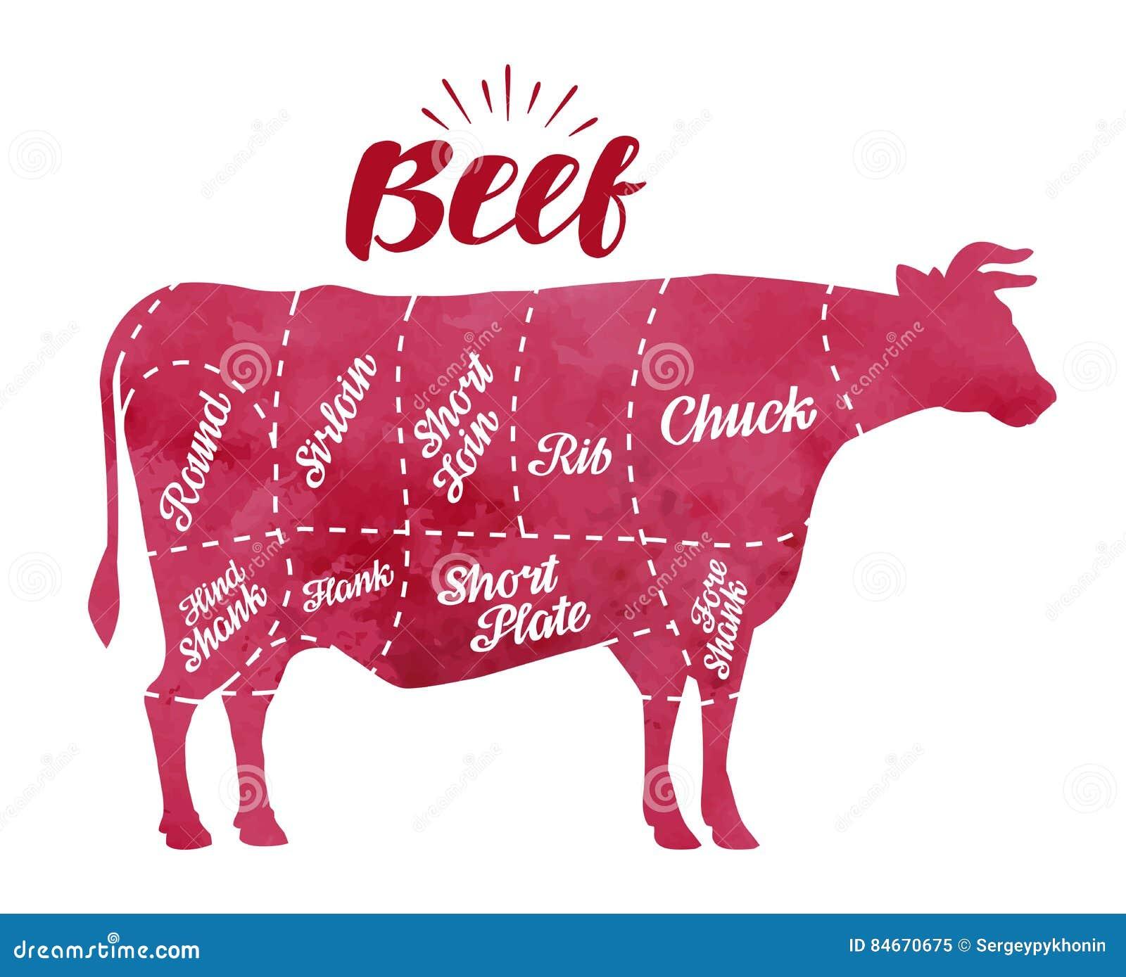 Diagram krowy tnący mięso Masarka sklep, byk, wołowina wektoru ilustracja