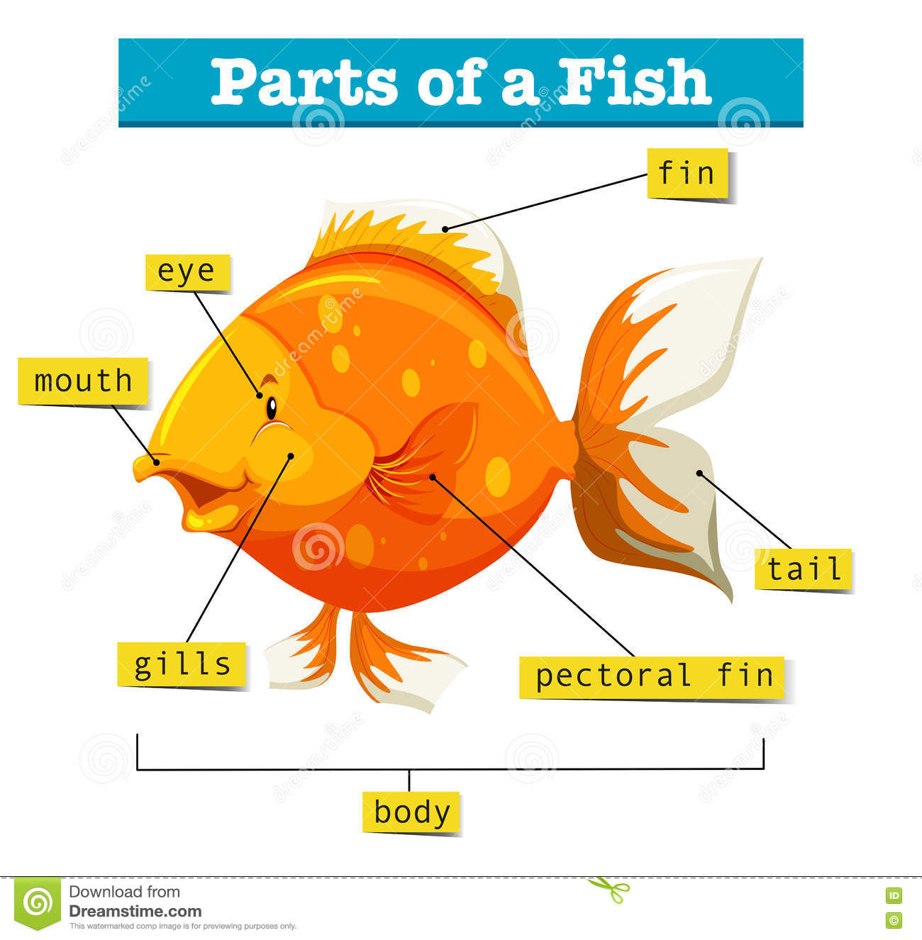Blank Diagram Of Parts Of A Fish - Auto Electrical Wiring Diagram •