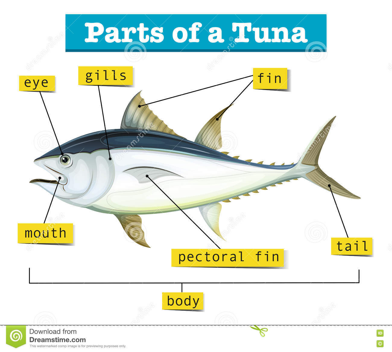 Diagram Showing Different Parts Of Tuna Stock Vector - Illustration ...