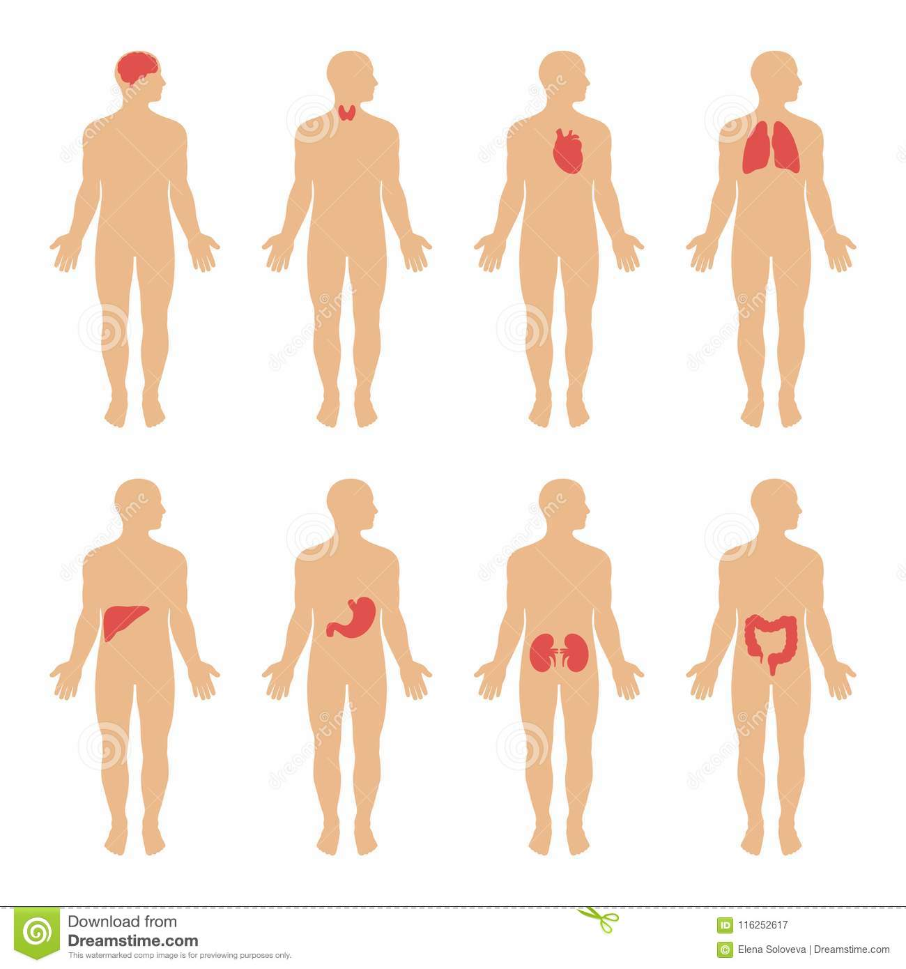 Diagram showing human body systems illustration