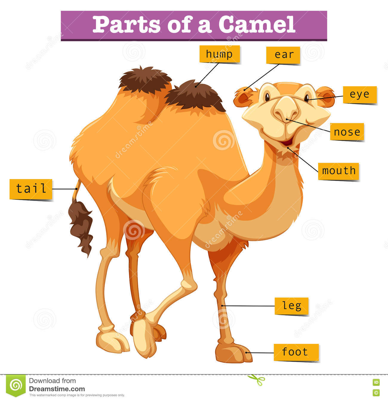 camel lessons tes teach