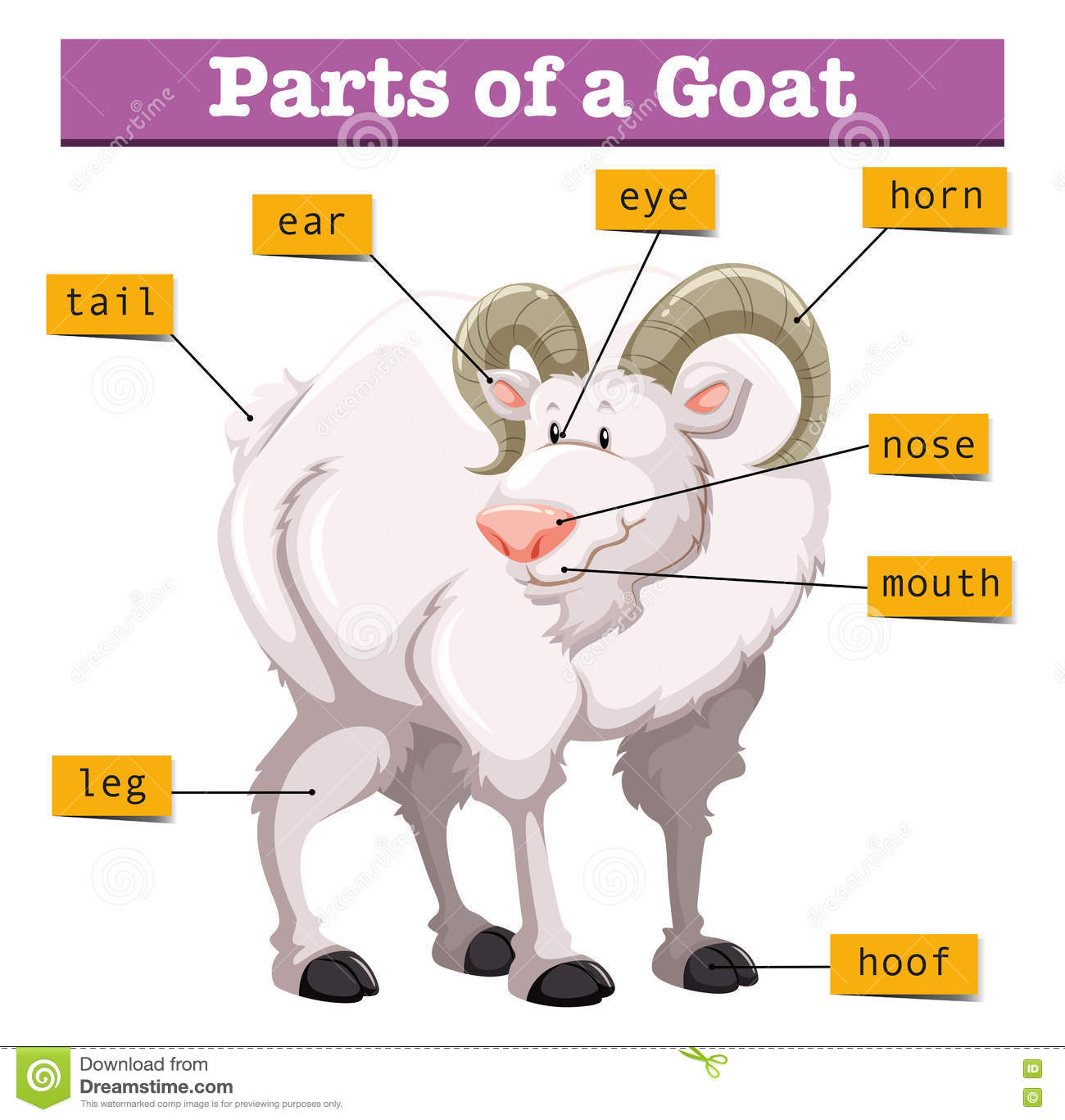 Diagram Showing Parts Of Goat Stock Vector Illustration Of Exotic